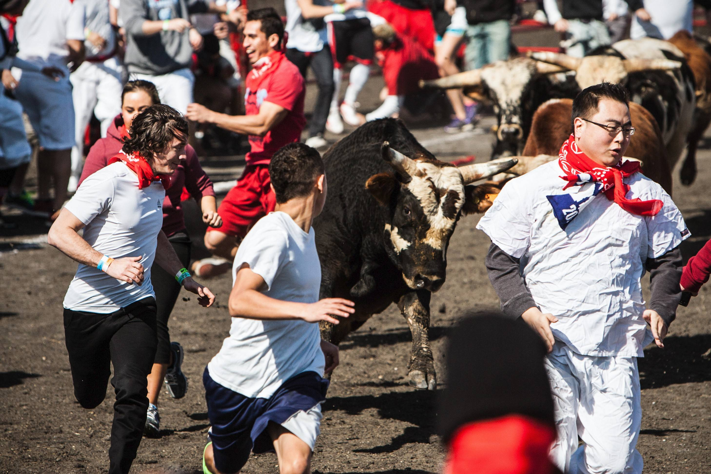 Thrill-seekers have long participated in Spain's running with the bulls. A modified version will be available July 12 at Hawthorne Race Course in Cicero.