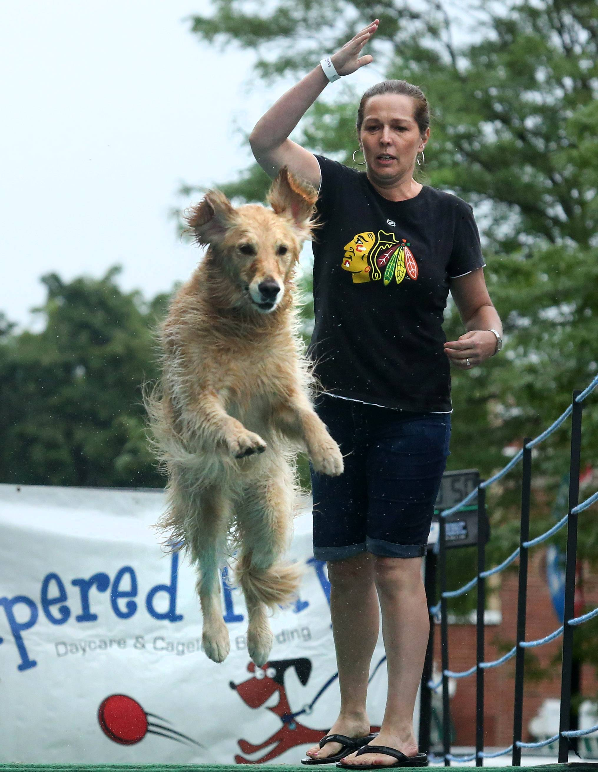 Tania Kothera of Schaumburg competes with her son Nate's golden retriever, Chevy, 3, in the DockDogs Big Air Dog Jumping event Friday  during Pampered Pup'z Dog Days of Summer in Libertyville. The contest resumes at 10 a.m. today.