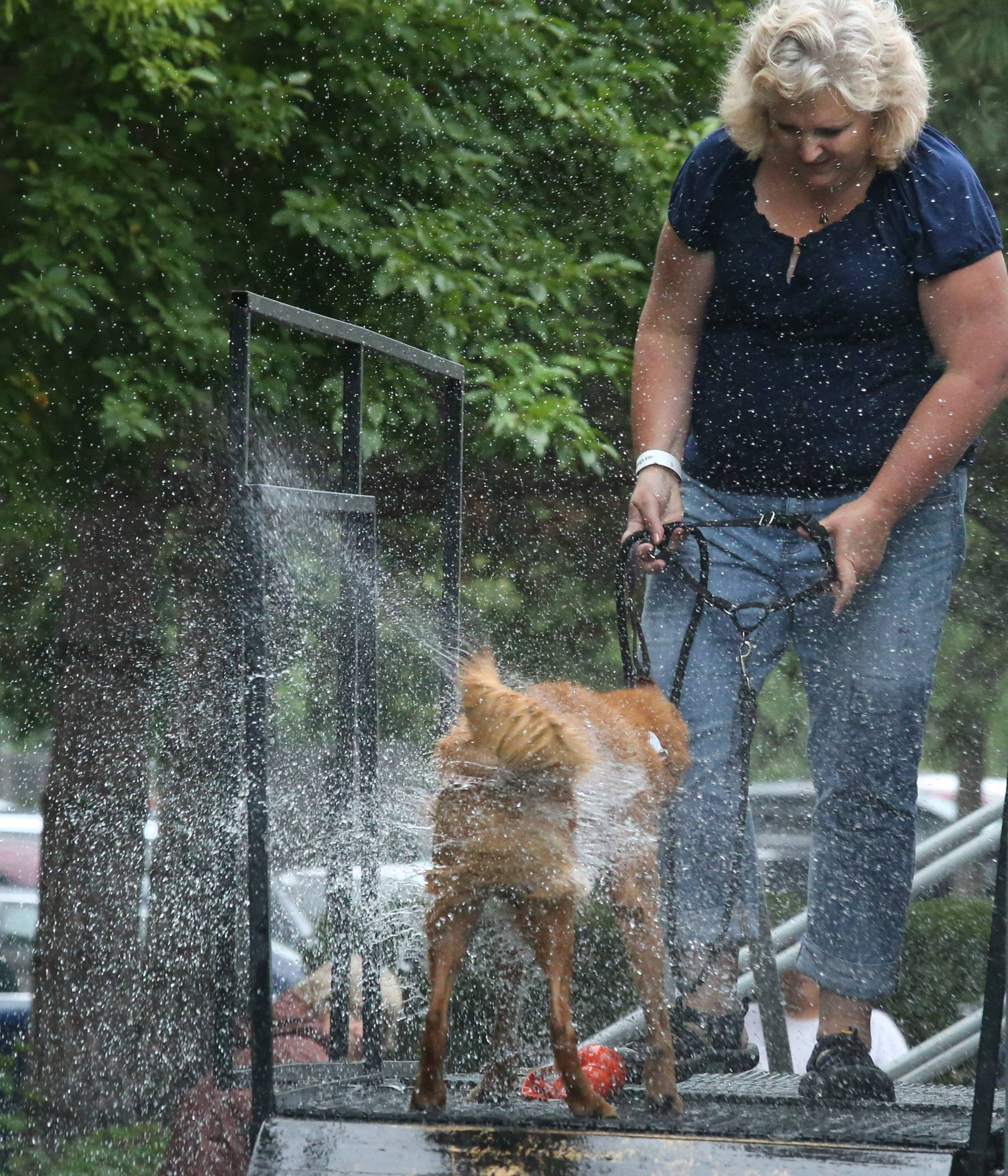 Elk Grove Village resident Roberta Mecklenburg's 7-year-old rescue dog, Halle, shakes water off after jumping into a 30,000-gallon pool Friday at the DockDogs Big Air Dog Jumping event in Libertyville