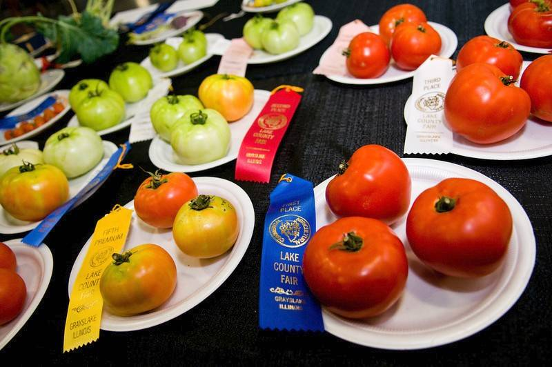 County fairs are a celebration of the area's agricultural past and present.