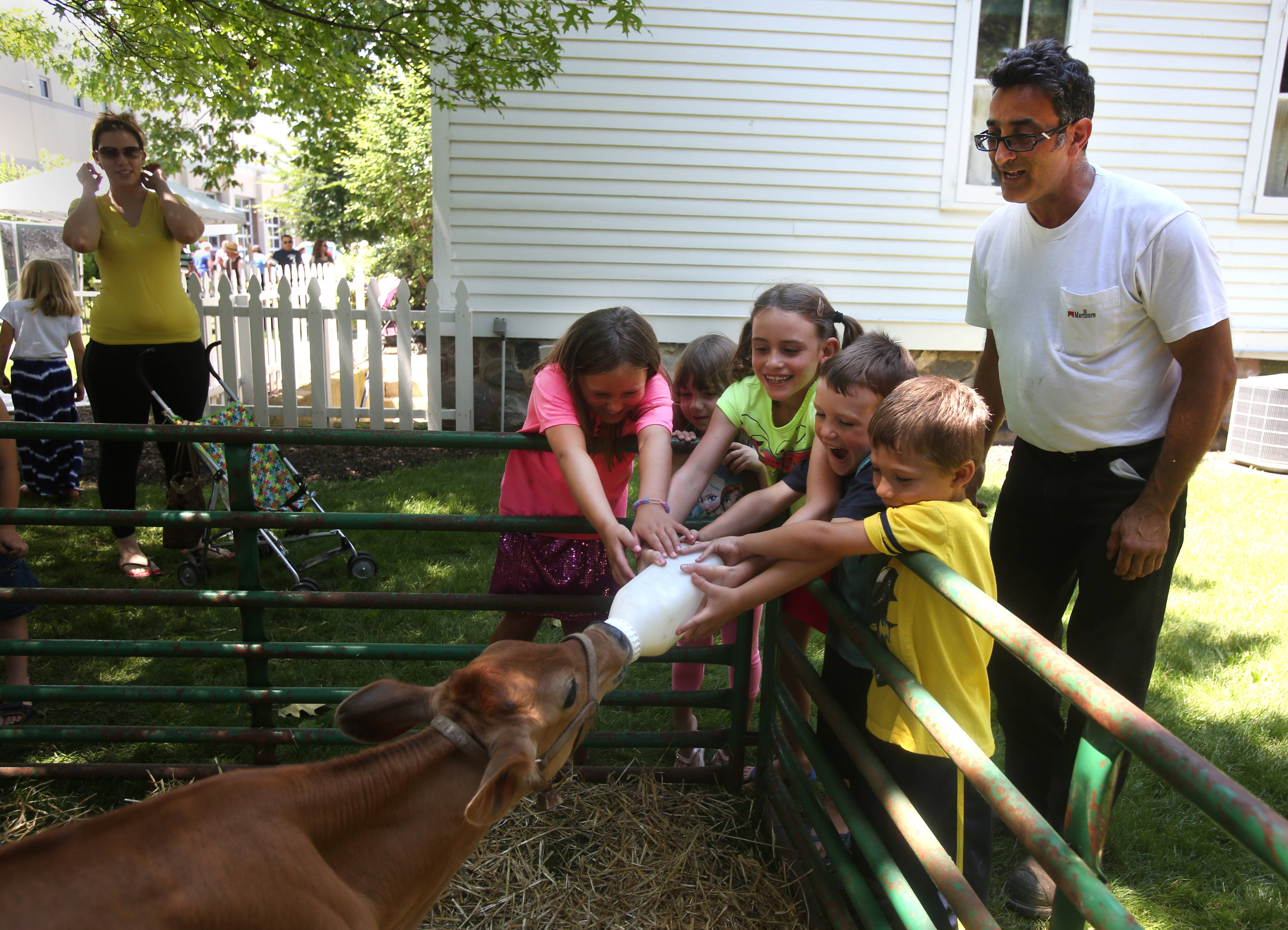 Andreas Georgiades oversees calf feeding Sunday during Dairy Day at the Elk Grove Historical Museum. Holding the bottle are Amber Heishman, 8, Olivia Hopkins, 8, Mason Hopkins, 6 and Zach Cohen, 6, all of Elk Grove Village.