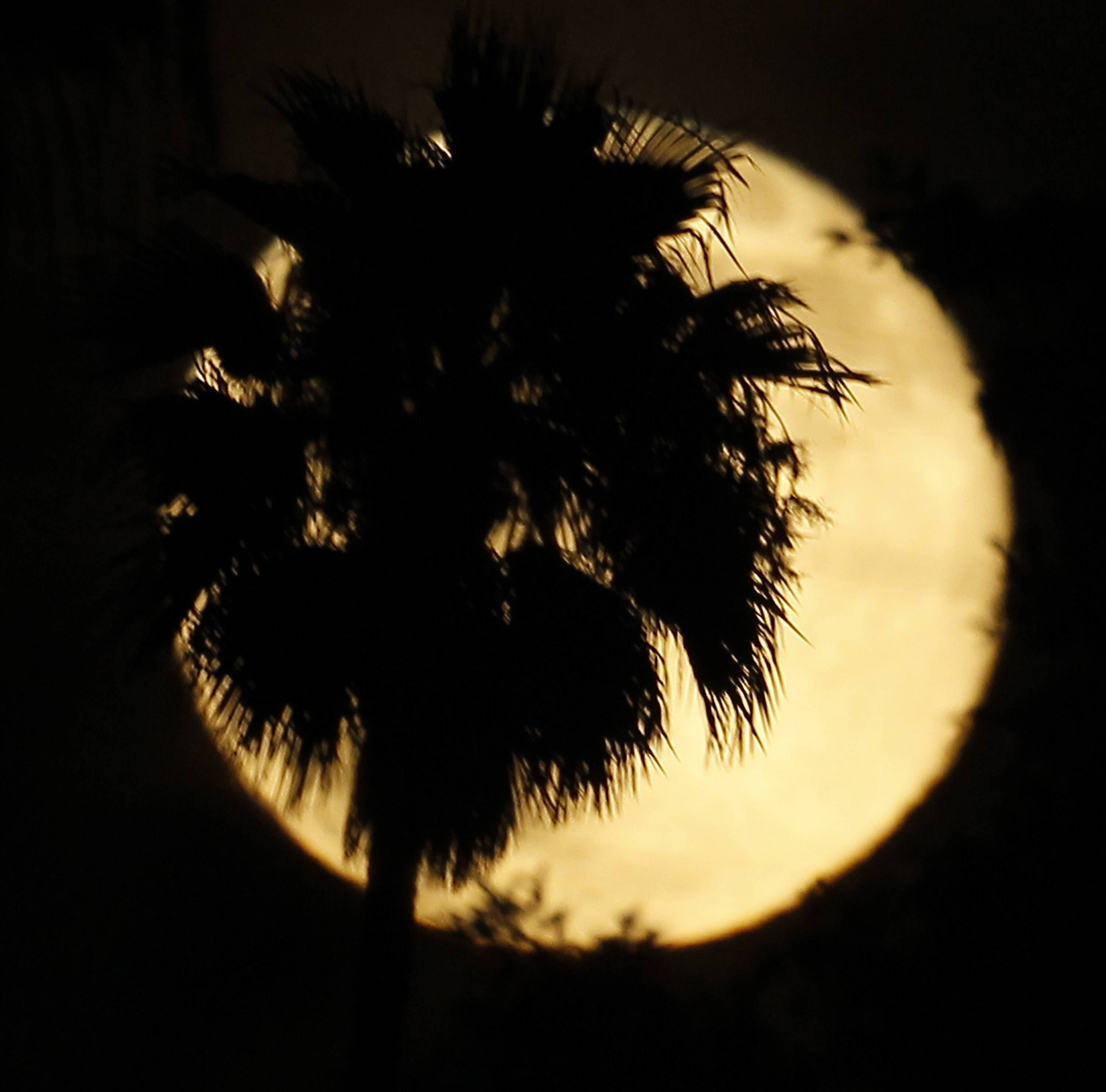 A palm tree is silhouetted against a supermoon in Whittier, Calif., Saturday, July 12, 2014.