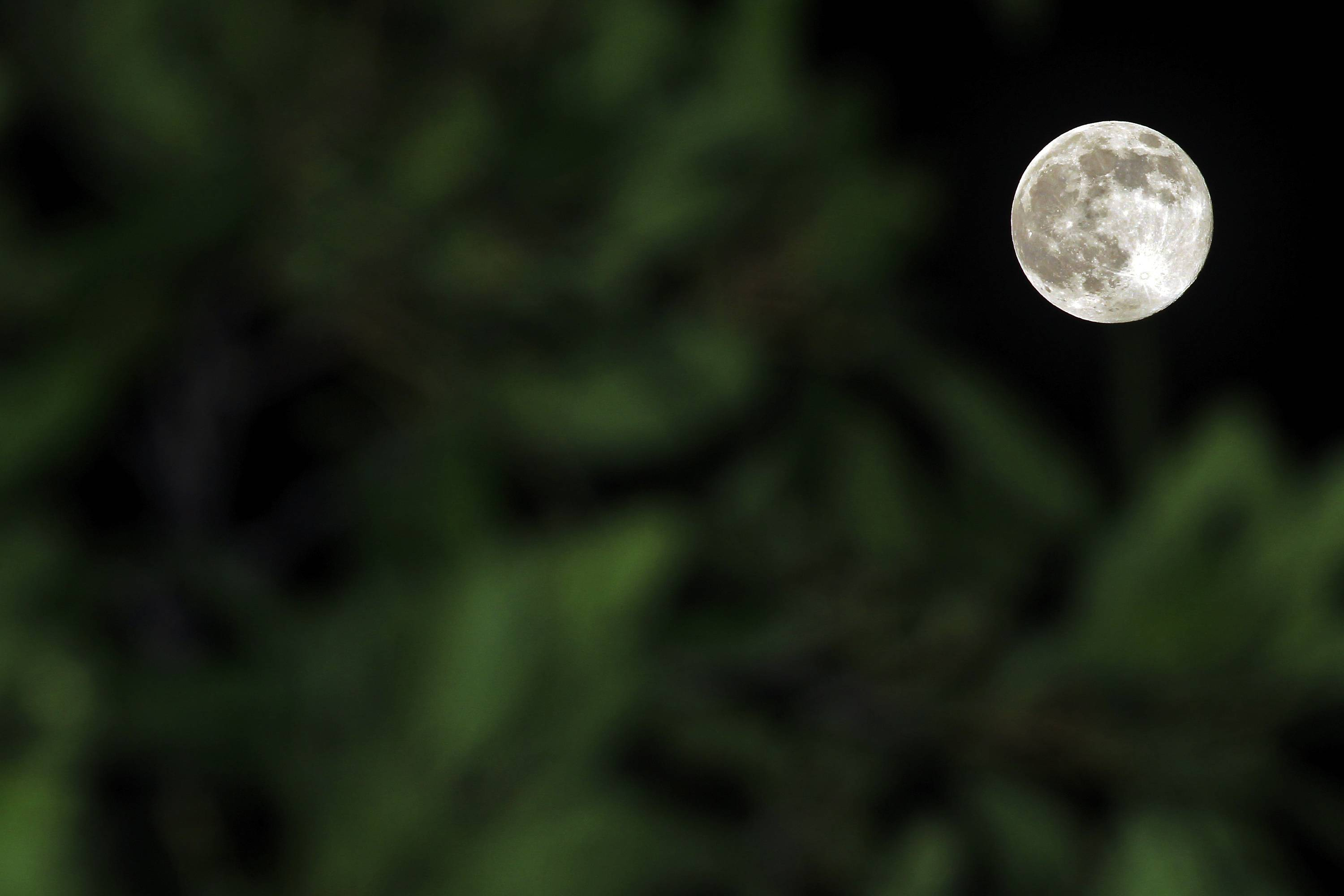 "A perigee moon also known as a supermoon rises behind a tree in Klang, outside Kuala Lumpur, Malaysia, Saturday, July 12, 2014. The phenomenon, which scientists call a ""perigee moon,"" occurs when the moon is near the horizon and appears larger and brighter than other full moons."