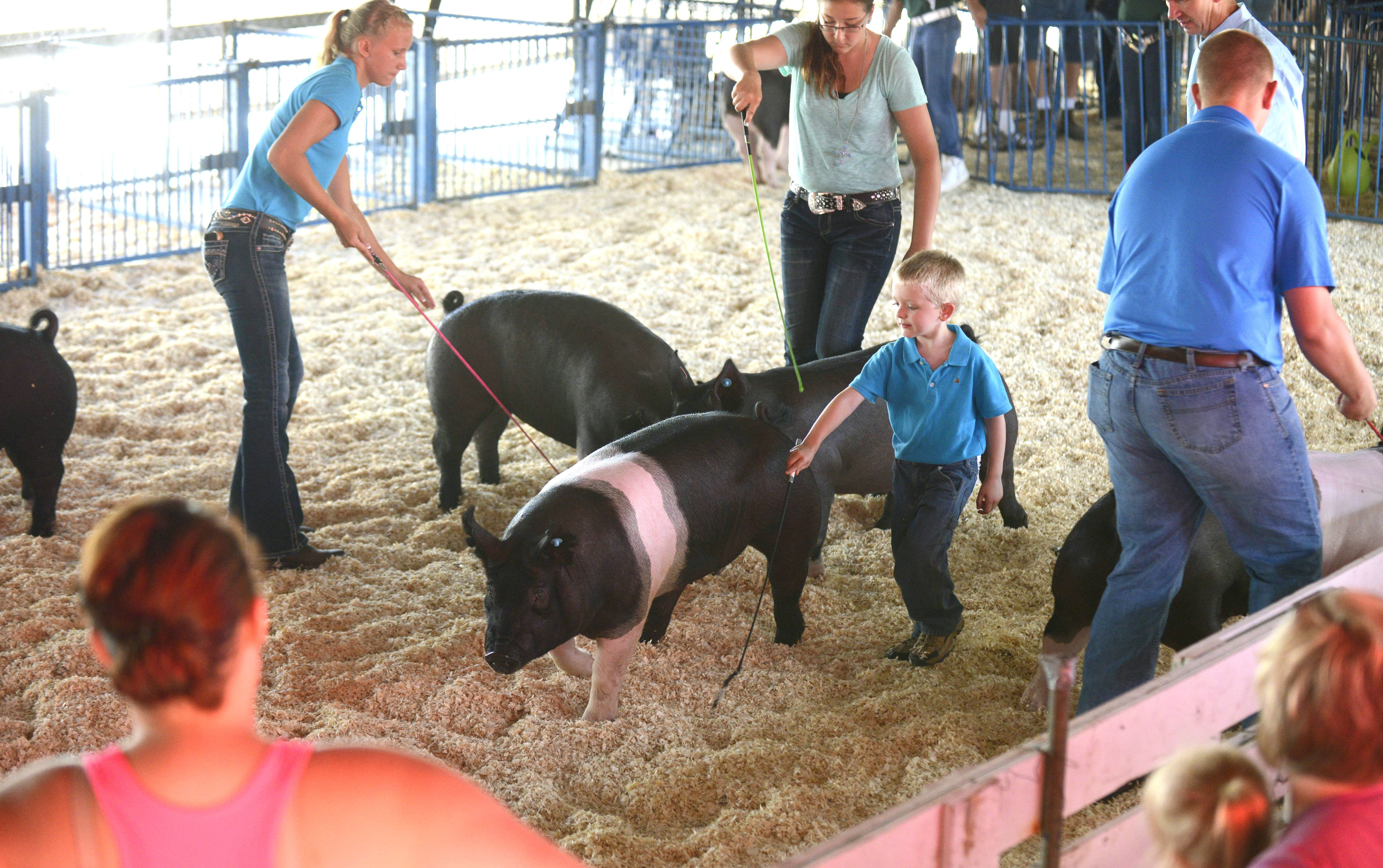 Clay Anderson, 4, of Big Rock, center, shows Happy the pig in the Class C Crossbred category at last year's Kane County Fair.