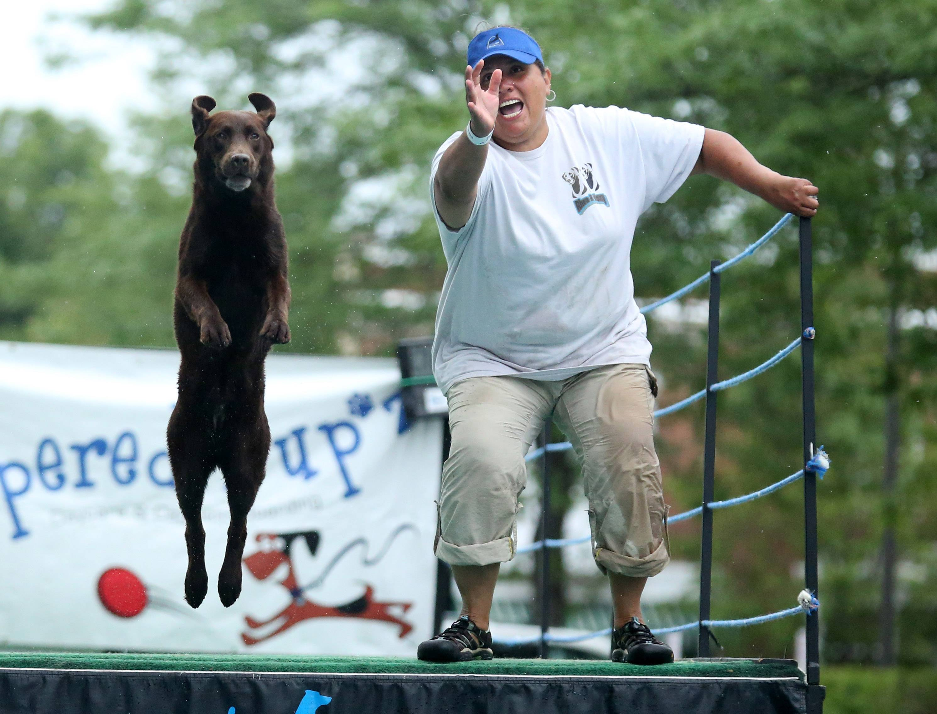 Pilar Zambrono, of Elmhurst, competes with her four year-old chocolate lab, Rhea, at DockDogs Big Air Dog Jumping during Pampered Pup'z Dog Days of Summer on Friday in Libertyville.