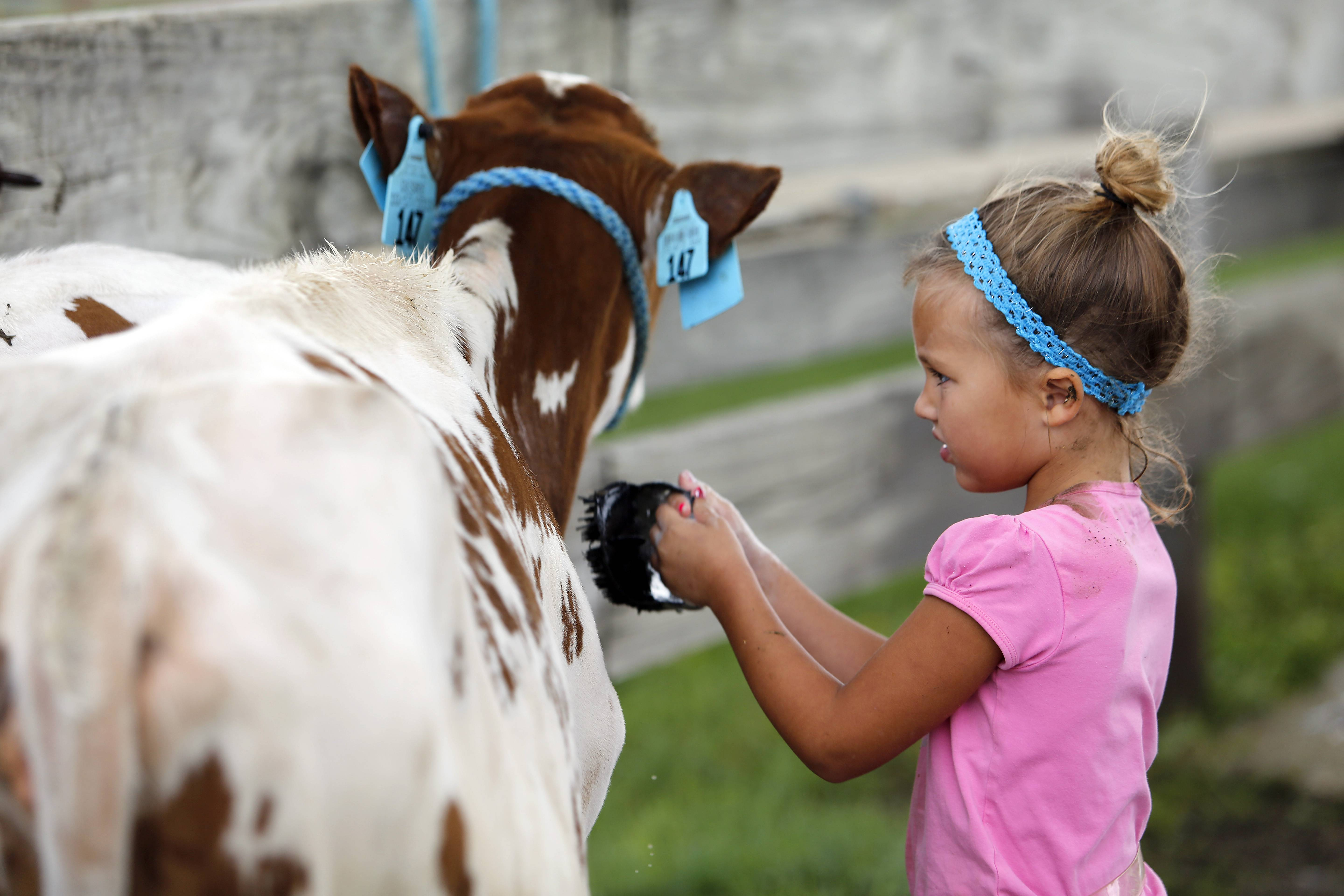 Kane County Fair opens Wednesday