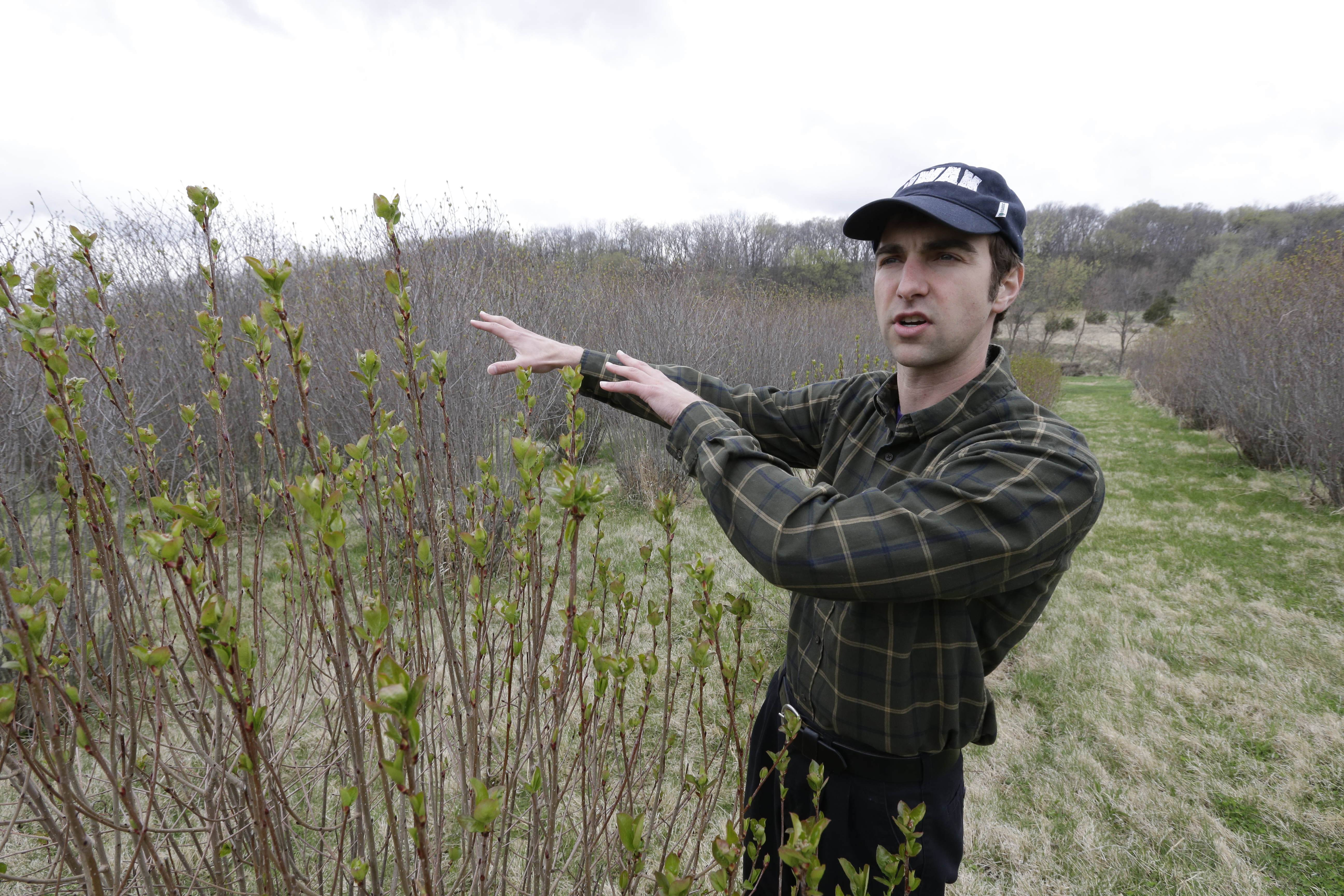"Andrew Pittz of the Sawmill Hollow aronia berry farm discusses farming of aronia berry plants in Missouri Valley, Iowa. The berry has set its sights on becoming the next ""superfood"" and is in hundreds of products worldwide."