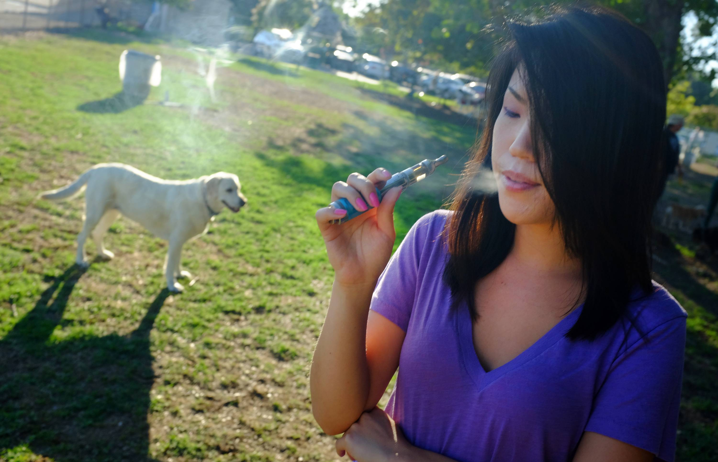 Recent surges in the use of e-cigarettes and chewing tobacco raised questions about those products on pets. The greatest danger is the trash, if dogs find discarded tobacco or nicotine cartridges from e-cigarettes.