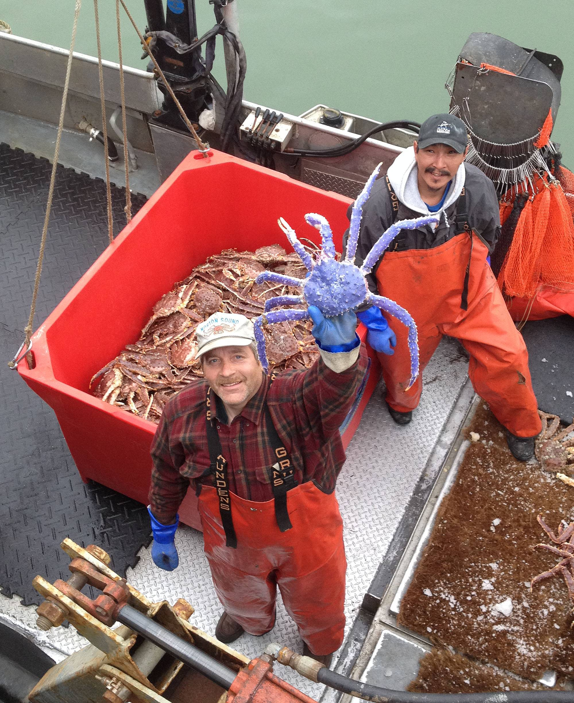 Crab fisherman Frank McFarland, left, holds up a rare blue-colored red king crab he caught in his commercial crabbing pots as Frank Kavairlook Jr., right, looks on in Nome, Alaska. The blue crab is being kept alive at the Norton Sound Seafood Center until McFarland can have it mounted.