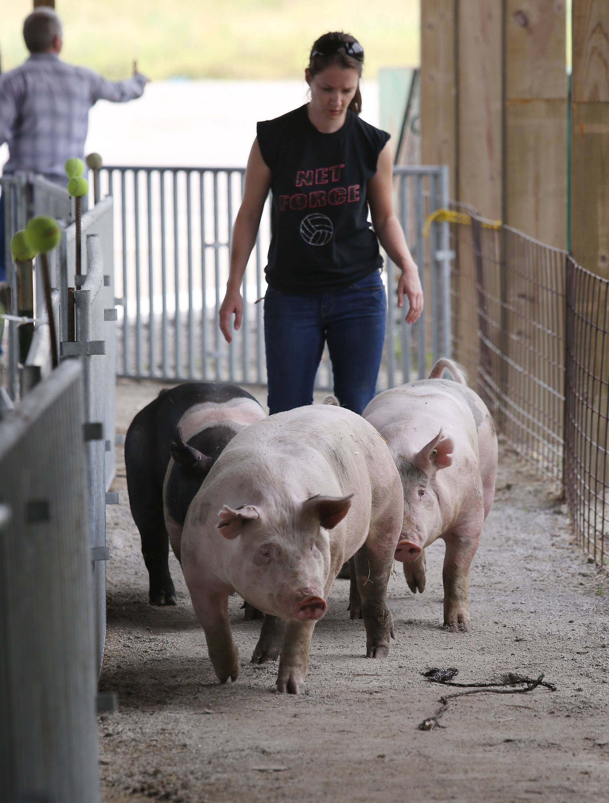 Maria Carlson of North Chicago herds her pigs to their cages at last year's Lake County Fair in Grayslake.