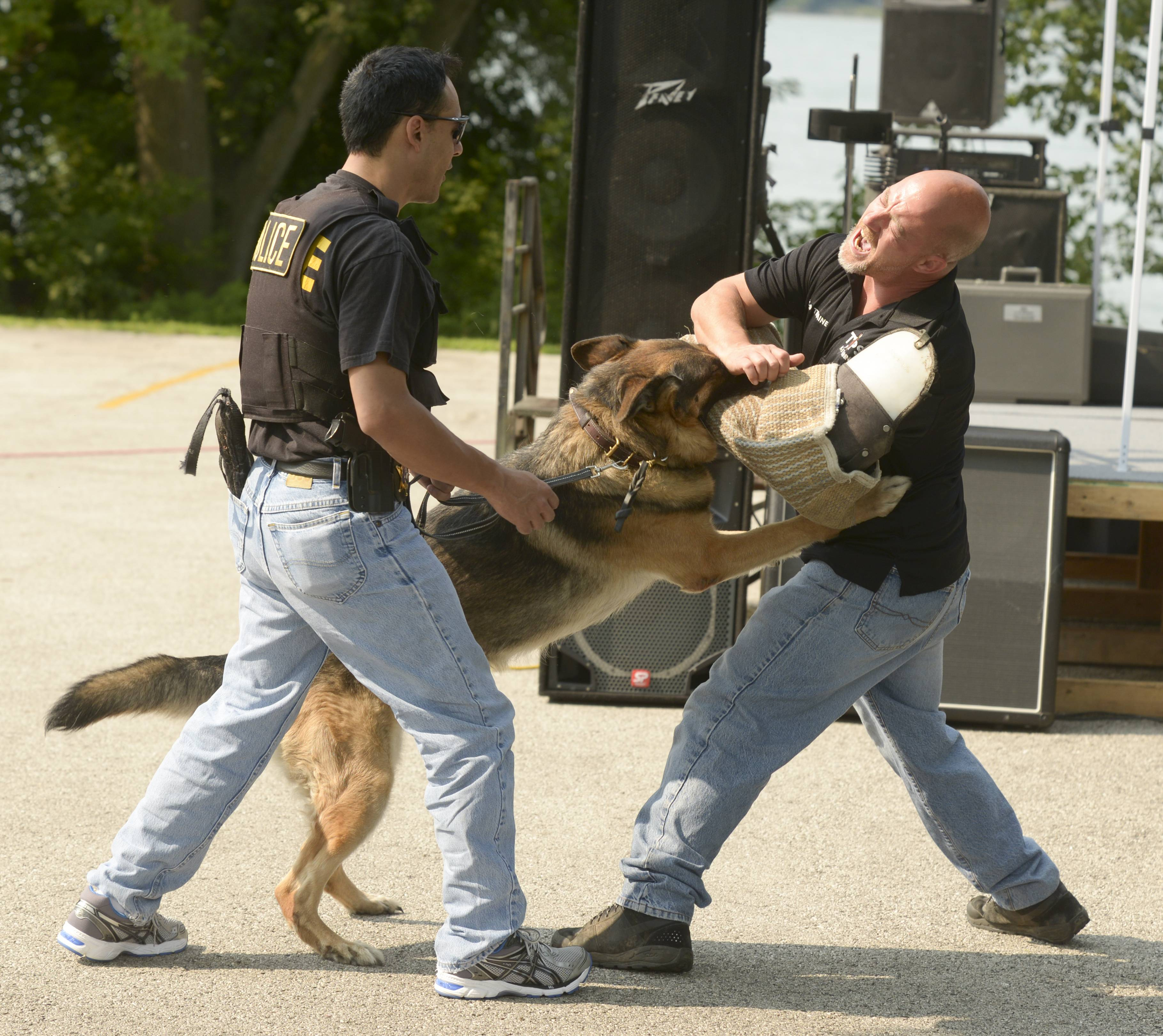 "Round Lake Park Police Cmdr. Tony Colon and his K-9 ""Blade"" demonstrate what a police dog is trained to do with the help of Tim Branon of Tops K-9 training facility Saturday during Round Lake Park's annual Lake Front Summer Festival."