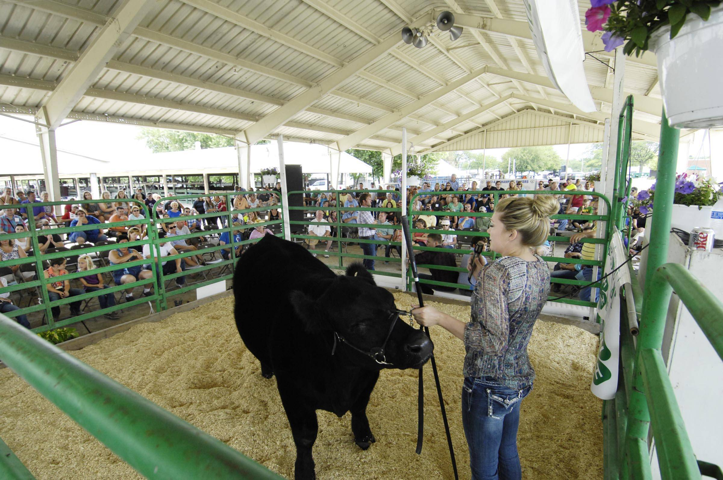 Danielle Engel begins to tear up as she thanks the crowd for support Sunday in the Blue Ribbon livestock arena at the Kane County Fair. Her 1,305-pound steer won grand champion and she sold it for $3.30 a pound in her last 4-H competition.