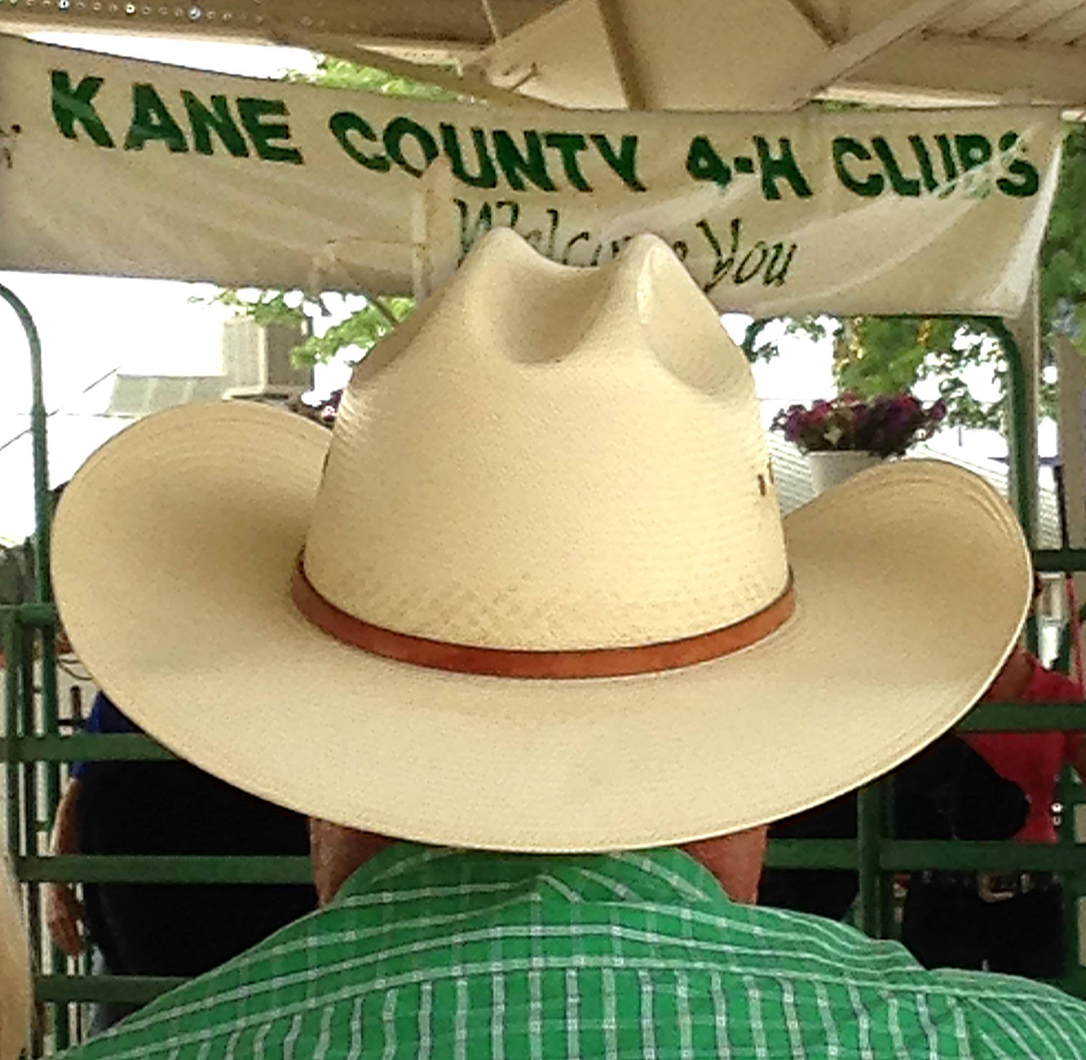 The 4-H Blue Ribbon Sale drew spectators to the livestock arena Sunday, the final day of the Kane County Fair. Steers, cattle, hogs, sheep and other livestock to win blue ribbon awards during the fair were sold at auction Sunday.