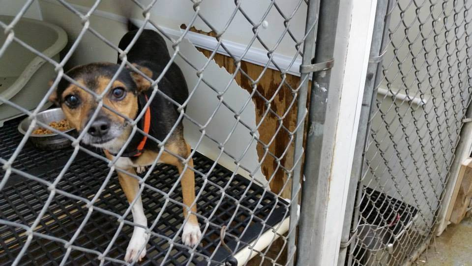 Batavia dog rescuers help counterparts in Tennessee