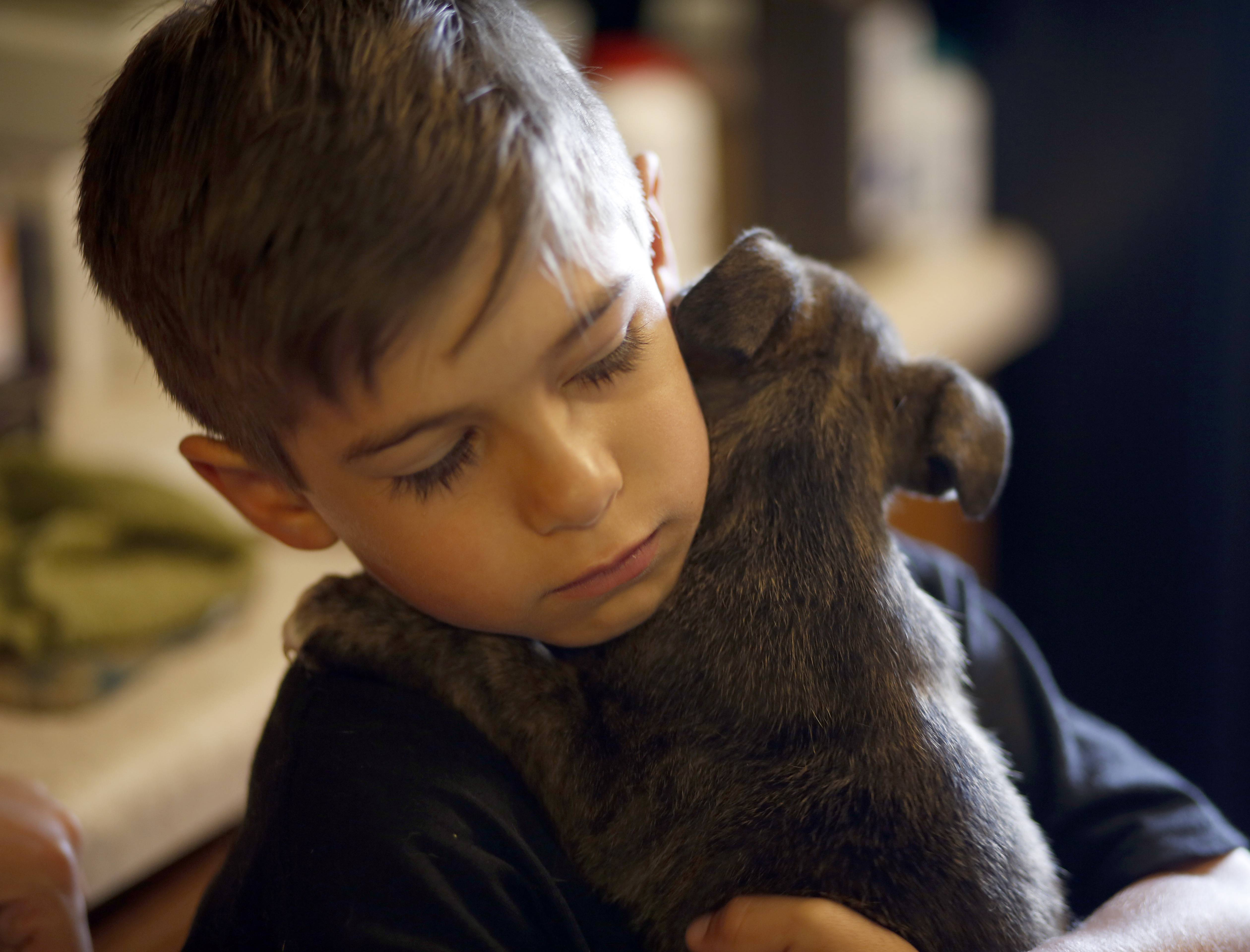 Michael Flanagan, 7, of Batavia holds one of the puppies that Casey's Safe Haven Horse and Dog Rescue brought back from a Tennessee shelter. His family provides foster care for rescued dogs before they are adopted.