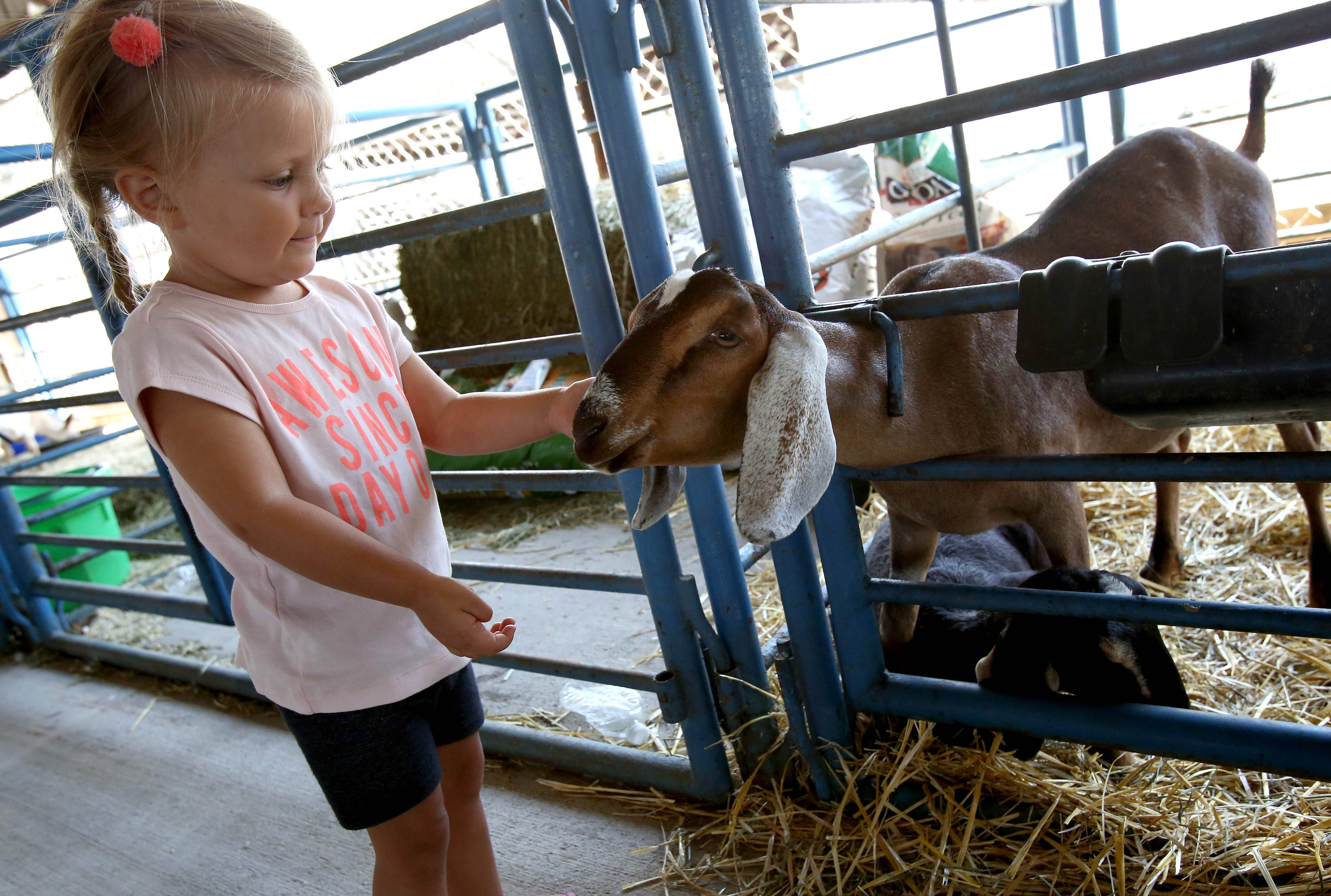 Leanna Reporto of Glendale Heights spends her third birthday visiting with the goats during opening day of the DuPage County Fair in Wheaton.