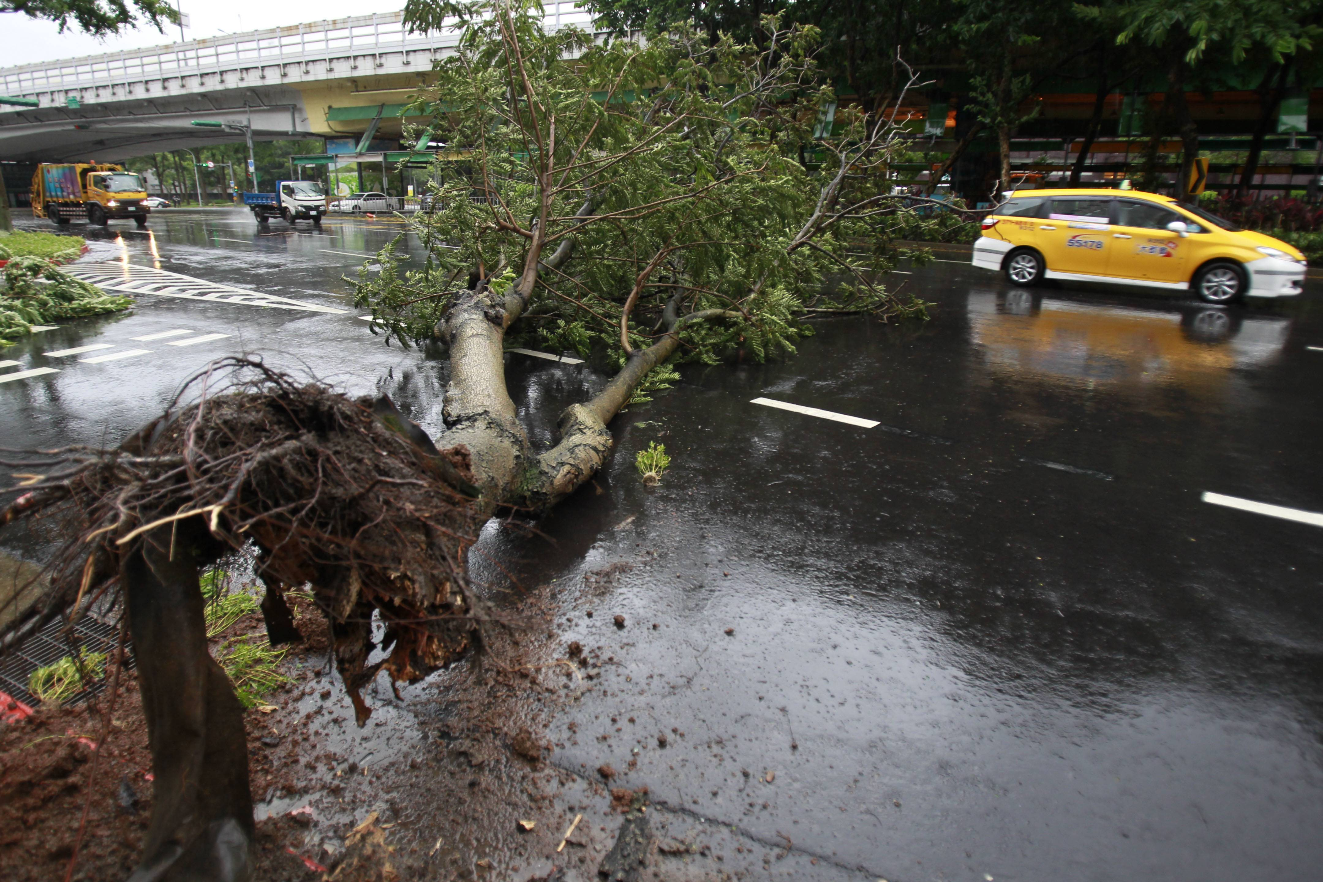 A taxi maneuvers around a fallen tree from Typhoon Matmo Taipei, Taiwan, Wednesday.