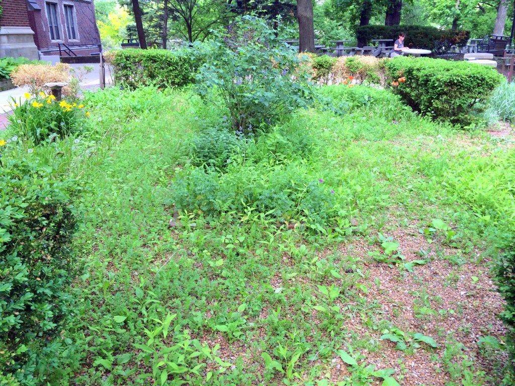Here's what the Shakespeare Garden looked like at Glenbard West before student Marty Keane and his team got involved.