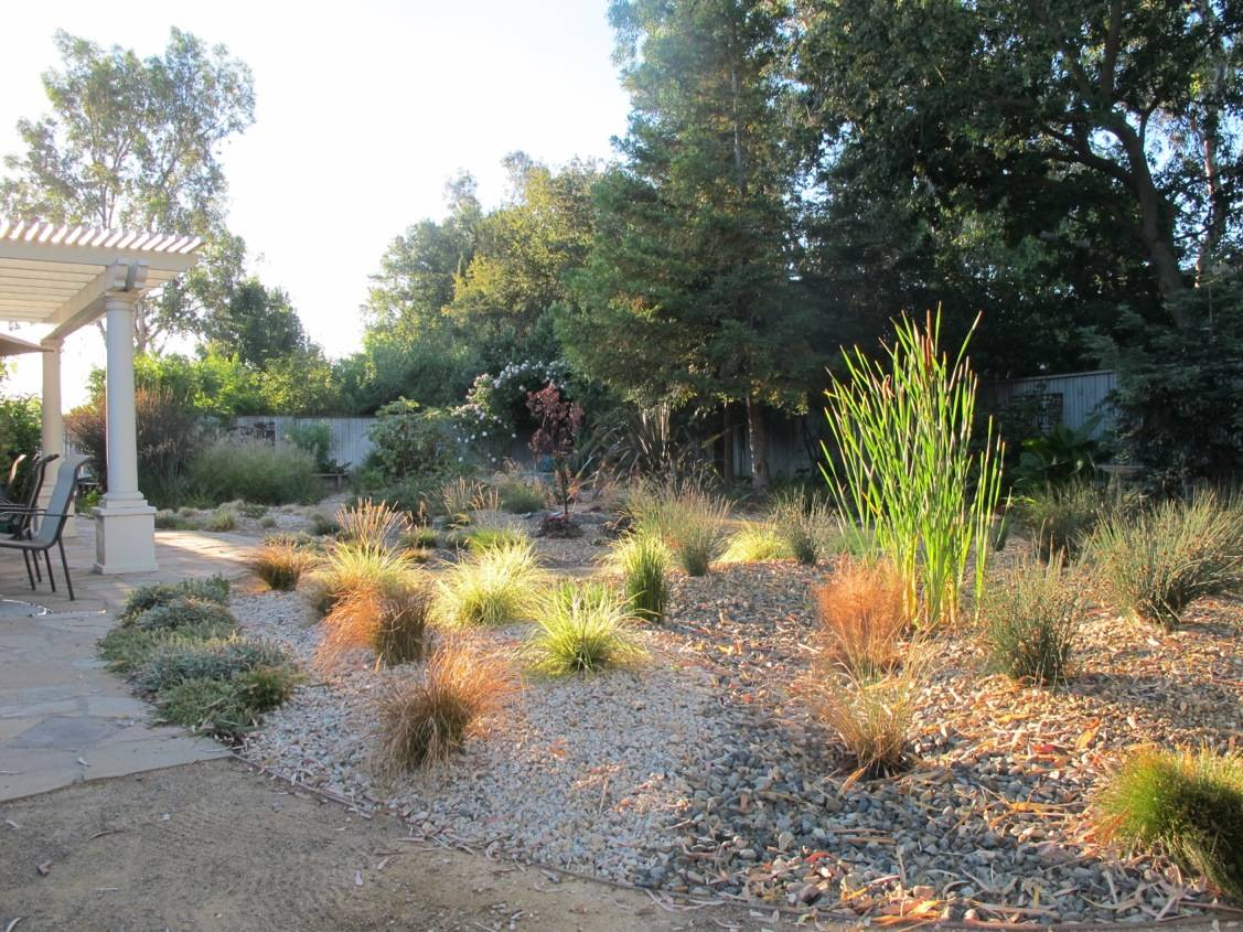 Ann Savageau's sustainable drought-tolerant garden includes cattail, sedge and rush in the foreground; and fescue, salvia and penstemon in the background.