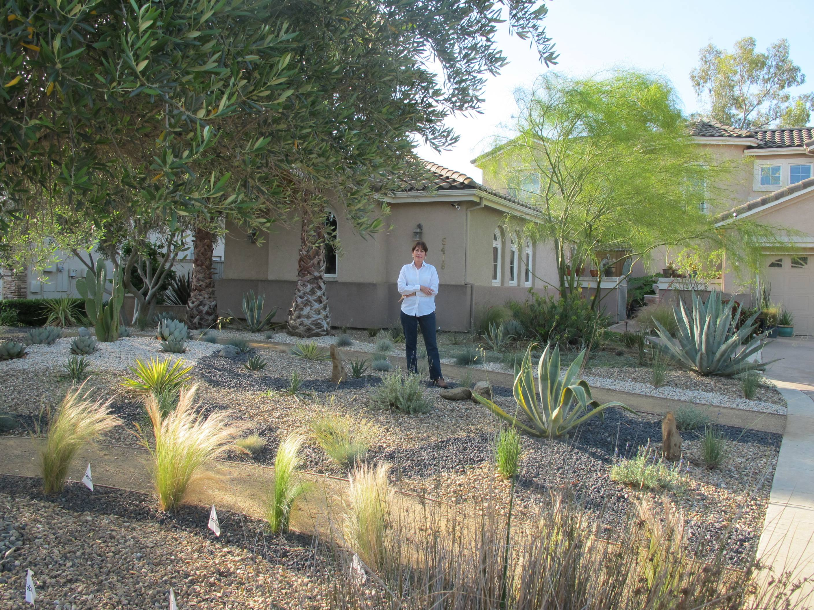 Ann Savageau, a design professor at the University of California at Davis, installed a new landscape consisting of a variety of cacti and agaves, fescues, sages, and grasses that have not fully grown in yet. Above, right, the home in Davis, Calif., used to have a typical Kentucky bluegrass lawn that required a lot of watering, fertilizer and herbicides.