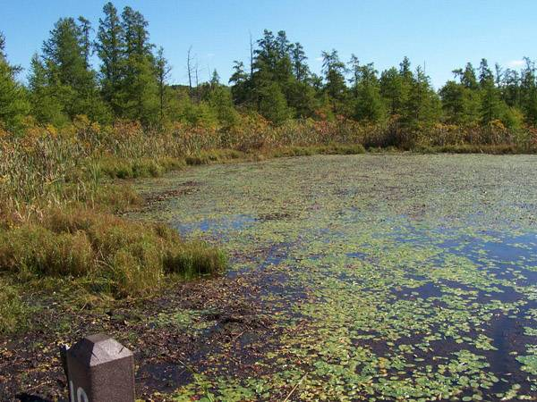The Volo Bog State Natural Area and the Friends of Volo Bog will be celebrating International Bog Day from noon to 5 p.m. on Sunday, July 27.