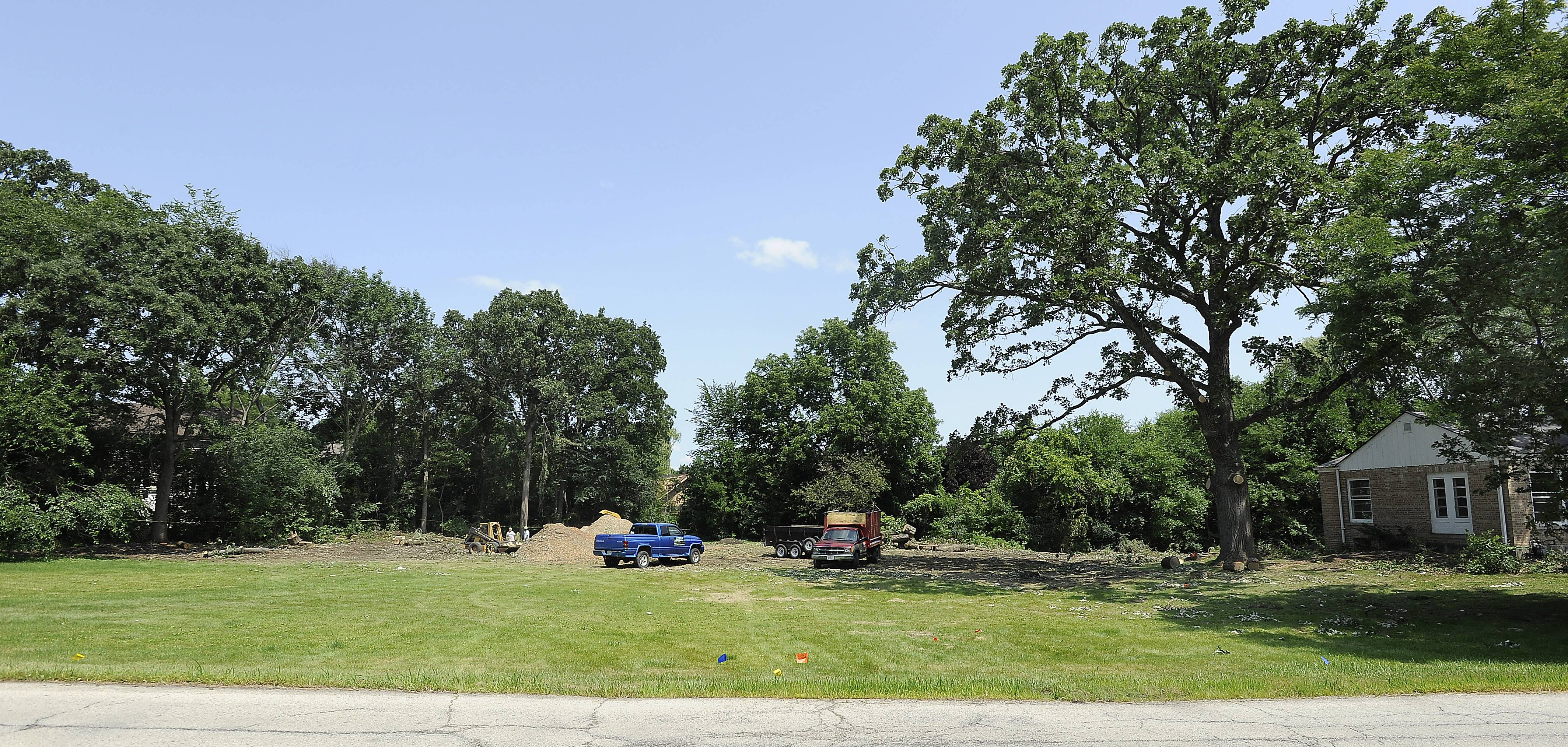 Neighbors fear this ancient oak will die after it was trimmed and two other old oaks near it were cut down over the weekend.