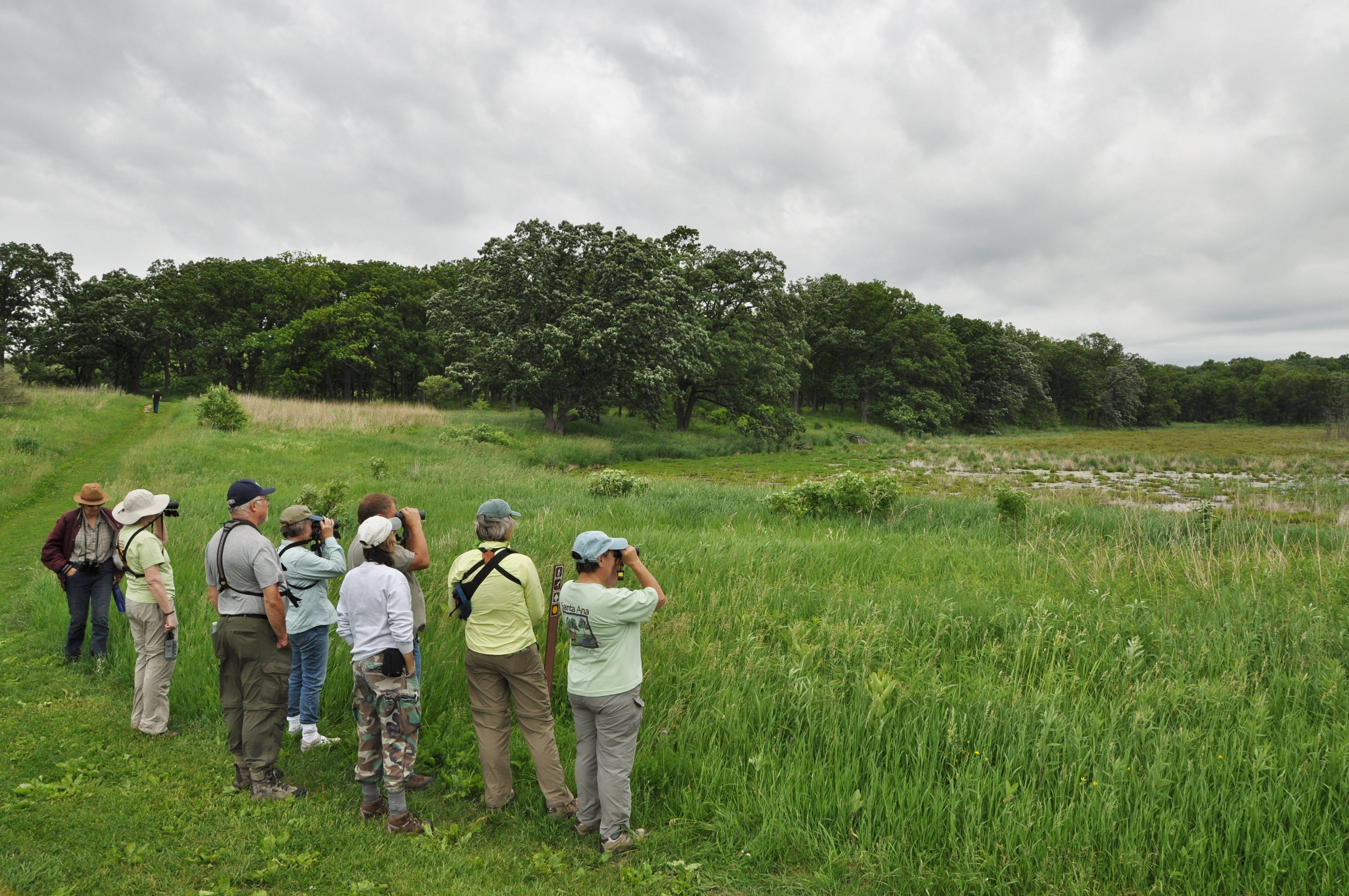 A birding group pauses to observe a bog at Glacial Park in McHenry County, where several great egrets were foraging and a bittern was seen briefly. The 3,200-acre Glacial Park is one of the key pieces of open land that comprise Hackmatack National Wildlife Refuge, itself a collection of federal, state, county and private parcels.