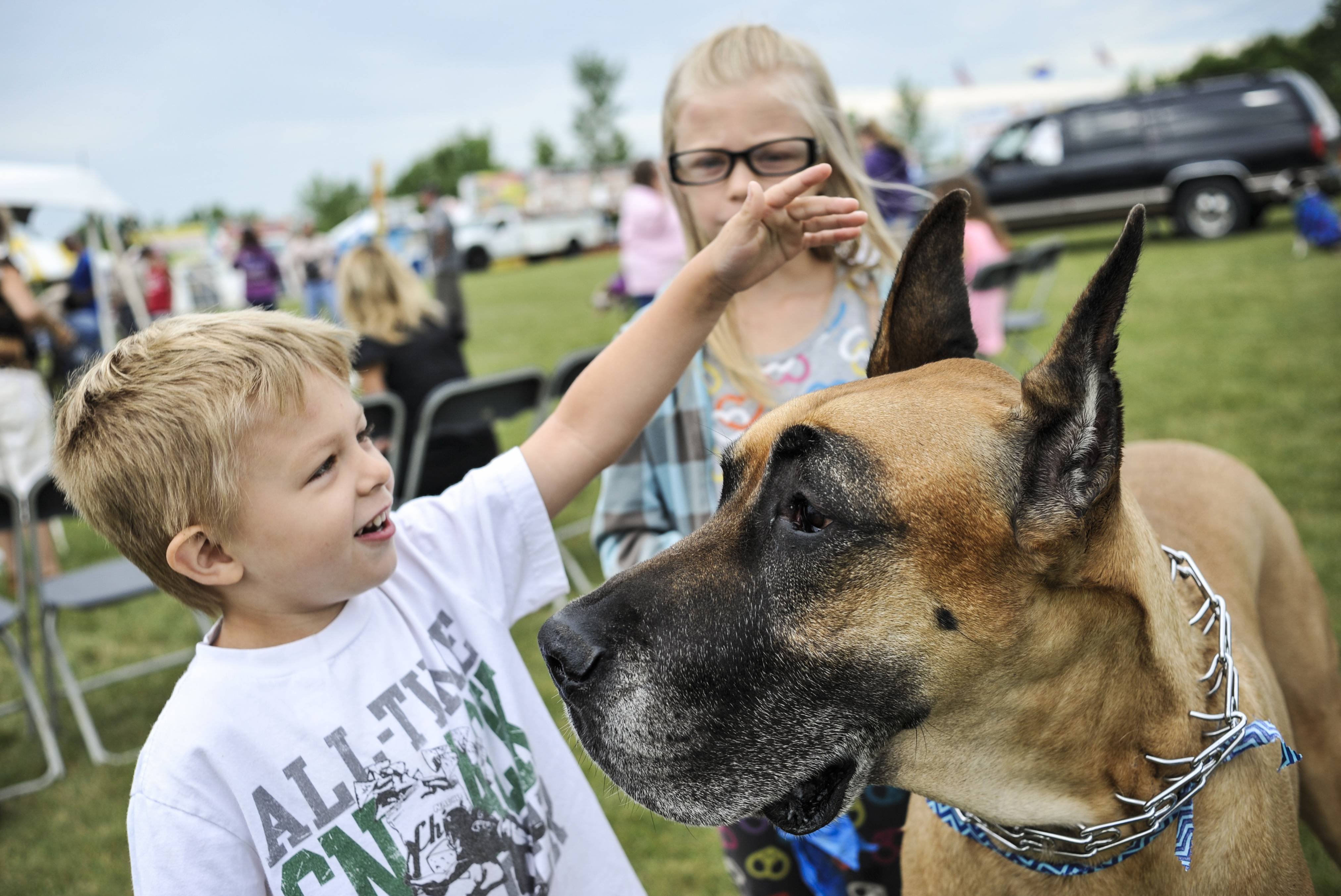 Deegan Forbes, 4 and his sister Kylie, 8, of Lake in the Hills, get their aunt's great dane Logan ready before the dog and cat show at the Algonquin Founders' Days festival in Algonquin Lakes Park on Friday. Logan won in the biggest dog category.
