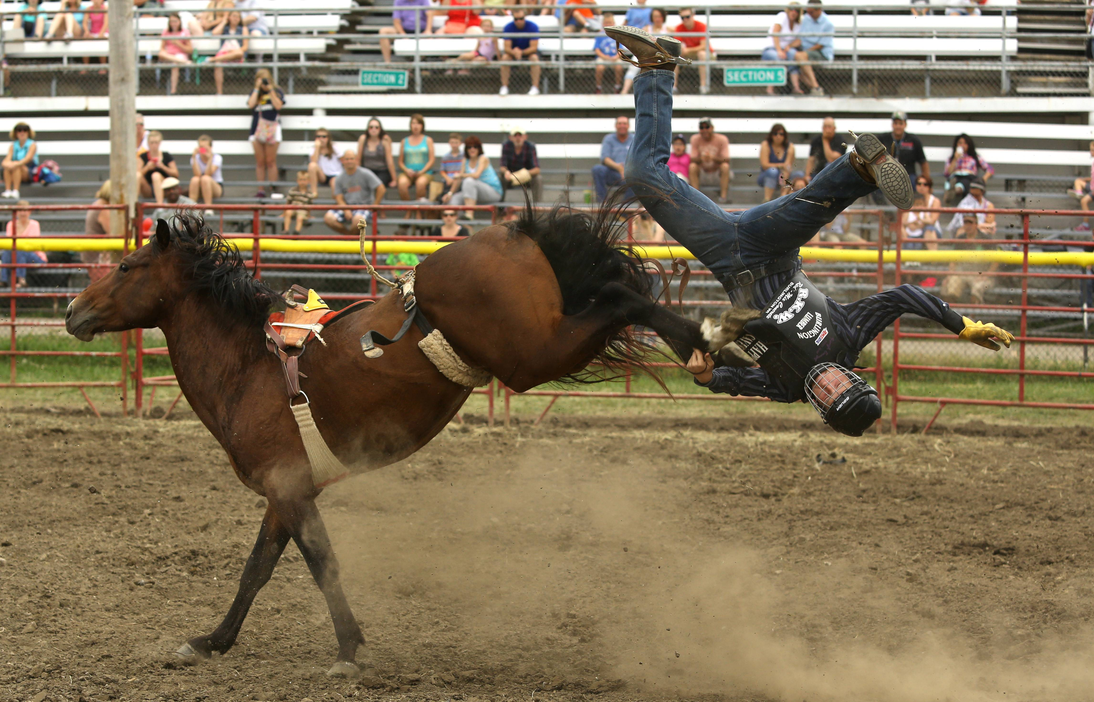 Bareback Bronc rider Michael Rankin, of Lake Geneva, lasts several seconds before being thrown to the ground during the Latting IPRA Rodeo at the DuPage County Fair.