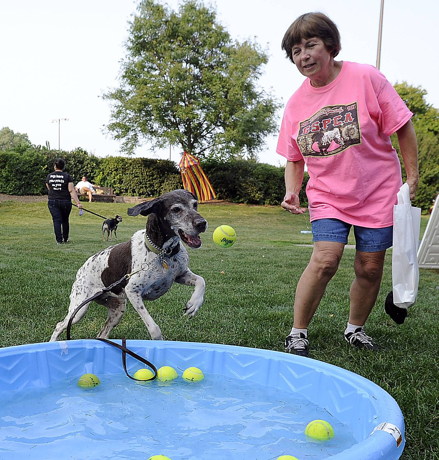 Mark Welsh/mwelsh@dailyherald.comPat Beckstrom and her German short hair pointer Daisy, also an excellent tennis player goes after a tennis ball at the dog carnival in Palatine on Thursday.