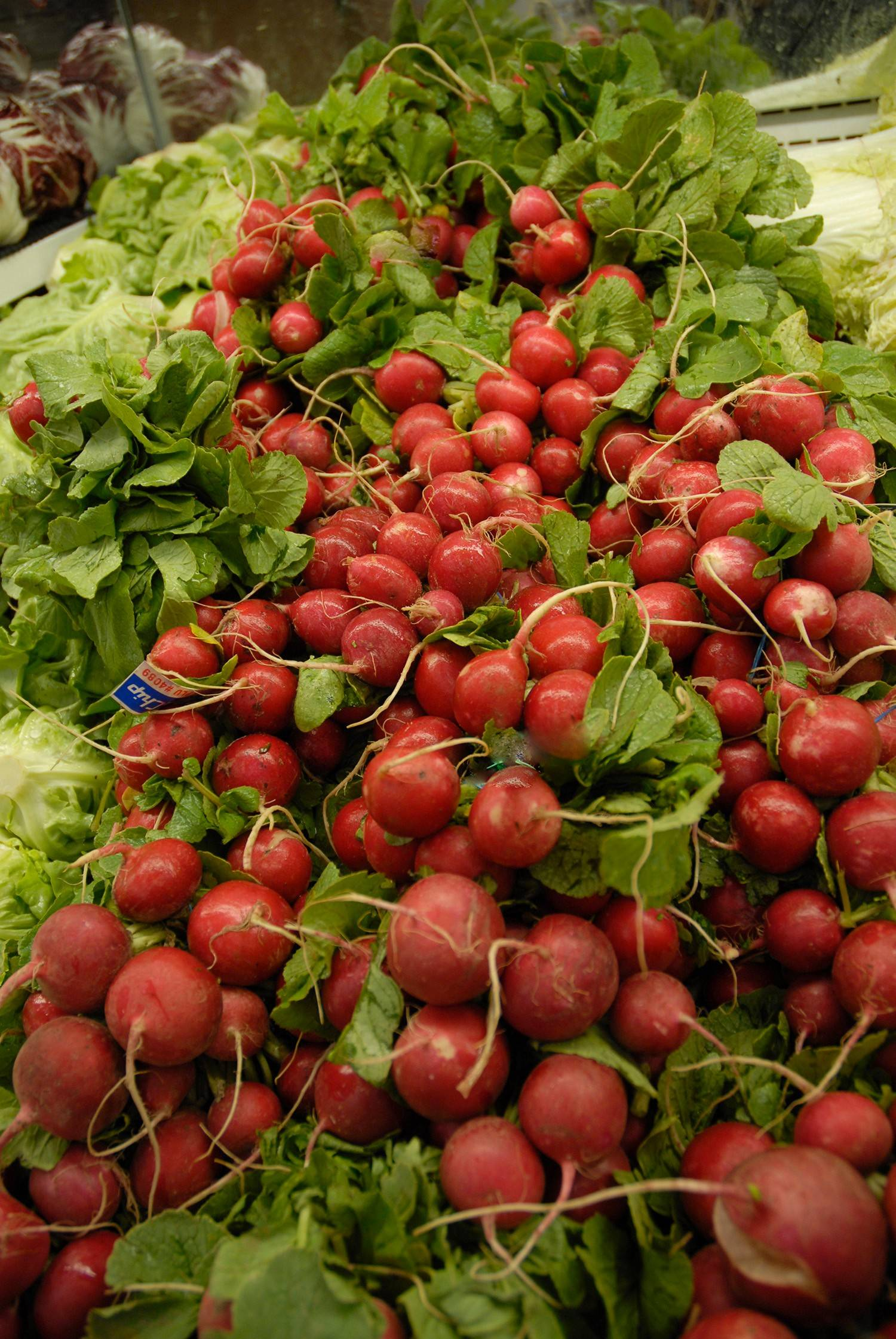 Plant crops for fall harvesting, such as these radishes, during the first week of August.