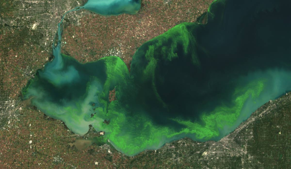 This satellite image provided by NOAA shows the algae bloom on Lake Erie in 2011, which according to NOAA was the worst in decades. The algae growth is fed by phosphorus mainly from farm fertilizer runoff and sewage treatment plants, leaving behind toxins that have contributed to oxygen-deprived dead zones where fish can't survive. The toxins can kill animals and sicken humans. Ohio's fourth-largest city, Toledo, told residents late Saturday not to drink from its water supply that was fouled by toxins possibly from algae on Lake Erie.