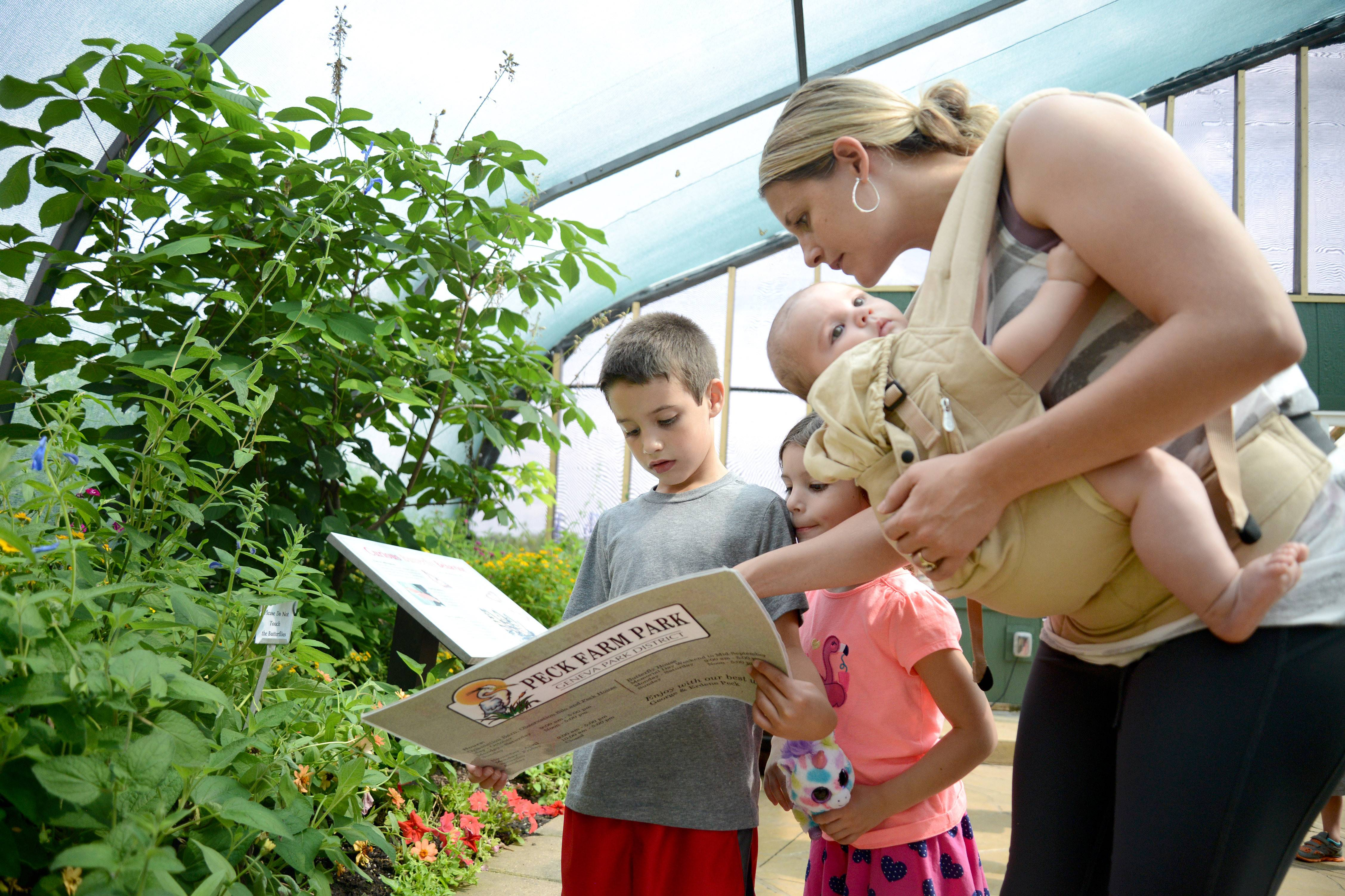 Angela Concha of Pingree Grove helps her children, Devin, 7, and Alexiana, 5, identify butterflies while holding their brother, Camden, 5 months, Wednesday at Peck Farm Park's Butterfly House in Geneva. The Concha family, including father Joe, wandered around the enclosure spotting more than 15 varieties of butterflies. Alexiana is a big fan of butterflies, and says her favorite species is the Queen butterfly, which was on display at the house.