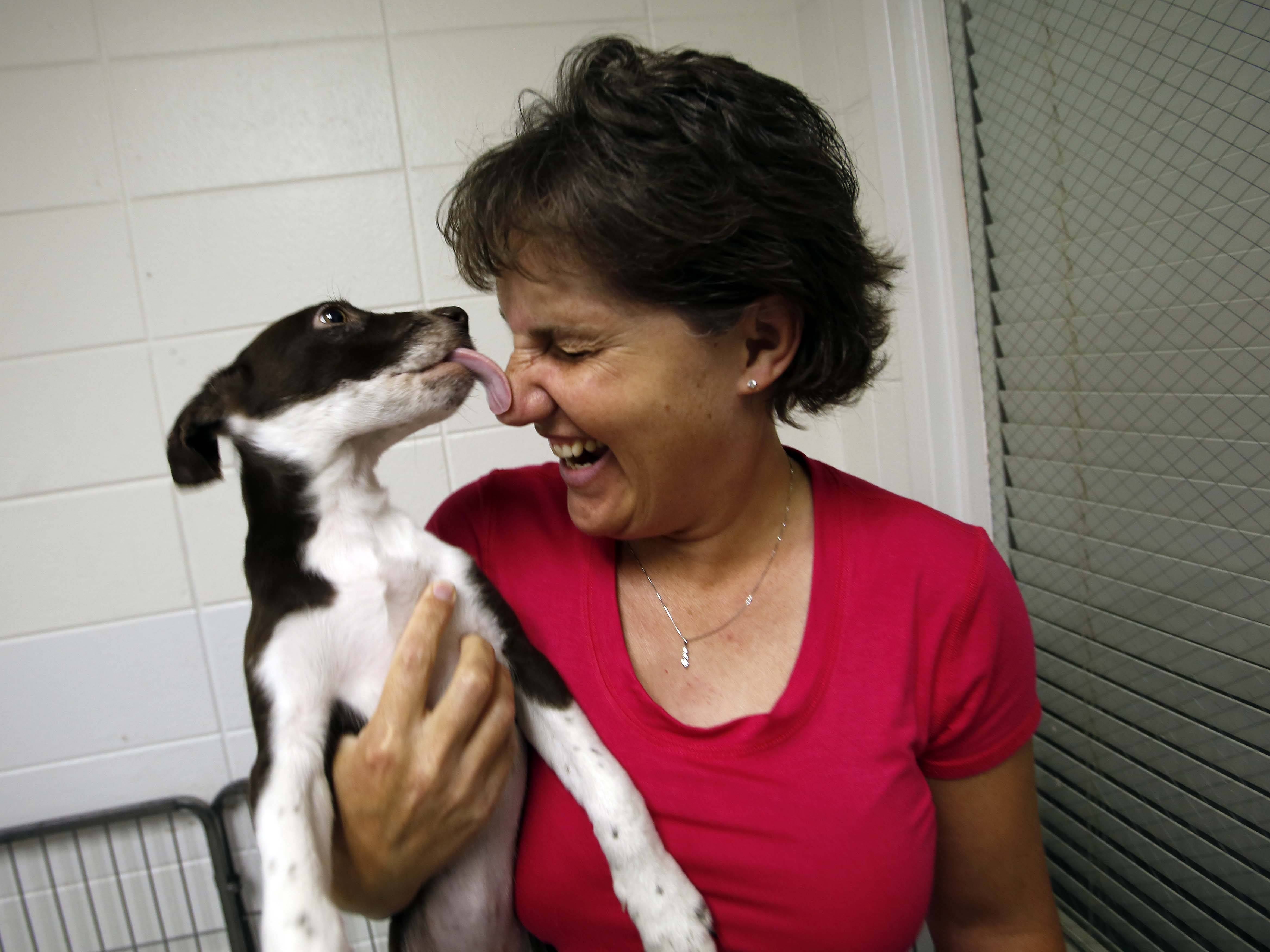 Anderson Animal Shelter Executive Director Beth Drake is welcomed by one of the puppies available for adoption at the South Elgin facility. Drake was hired in mid-May and already has spearheaded a number of changes, including a $600,000 renovation that will start Sept. 1.