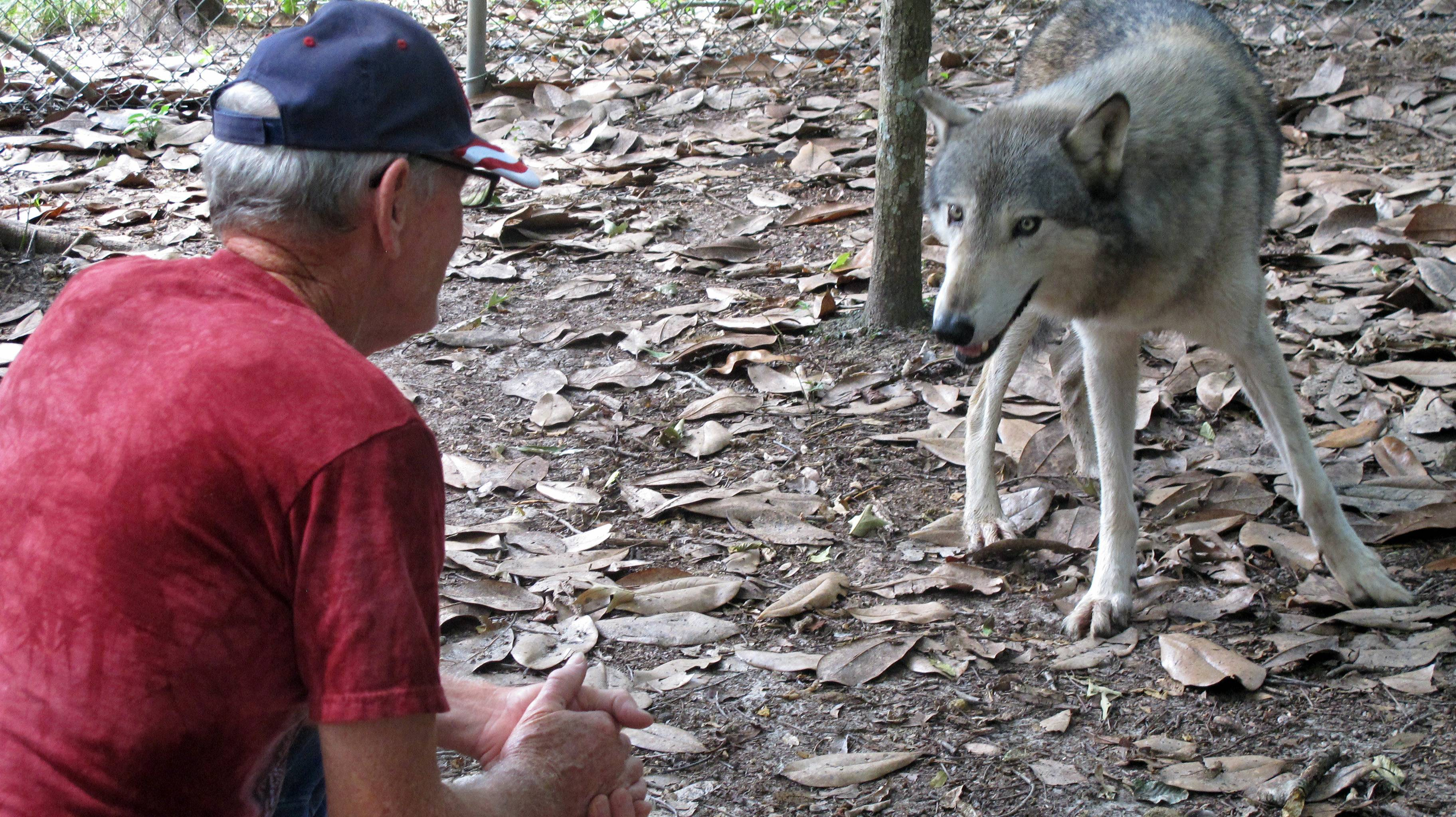 Wayne Watkins kneels near a wolf inside the Seacrest Wolf Preserve in Chipley, Florida. The 450-acre preserve was damaged during heavy rains that flooded the region in April.