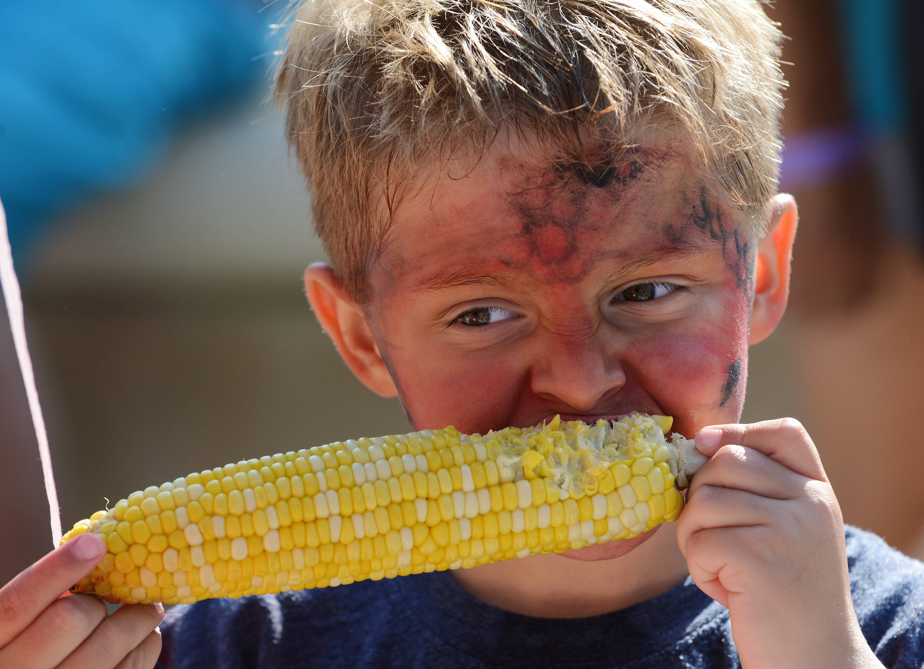 Connor Bever, 5, of Arlington Heights digs into an ear of corn at the Mane event in downtown Arlington Heights Saturday.