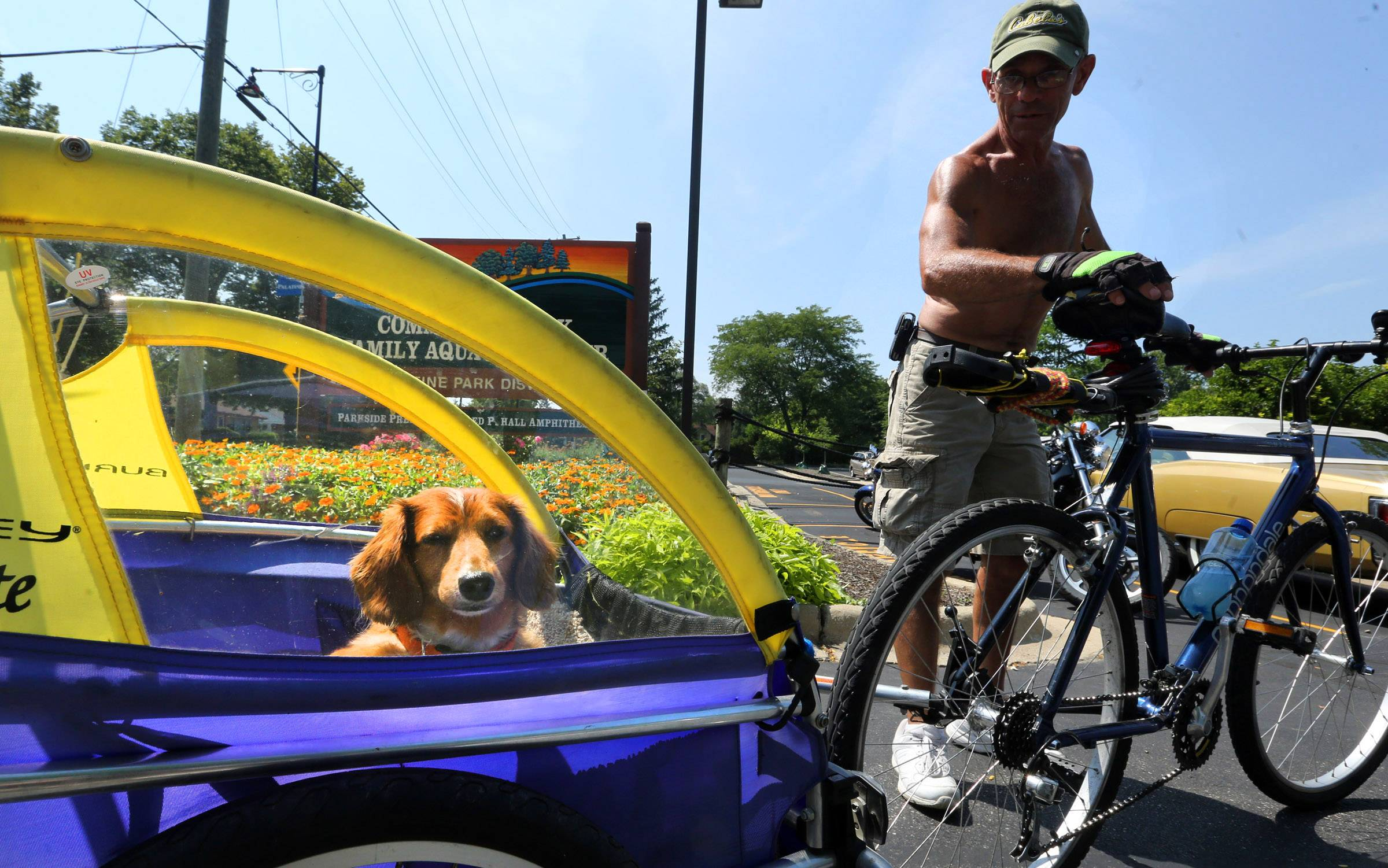 Tom Zenaty of Rolling Meadows takes his 10 year-old longhair dachshund, Frankie, for a ride in Palatine near Northwest Highway on Saturday.