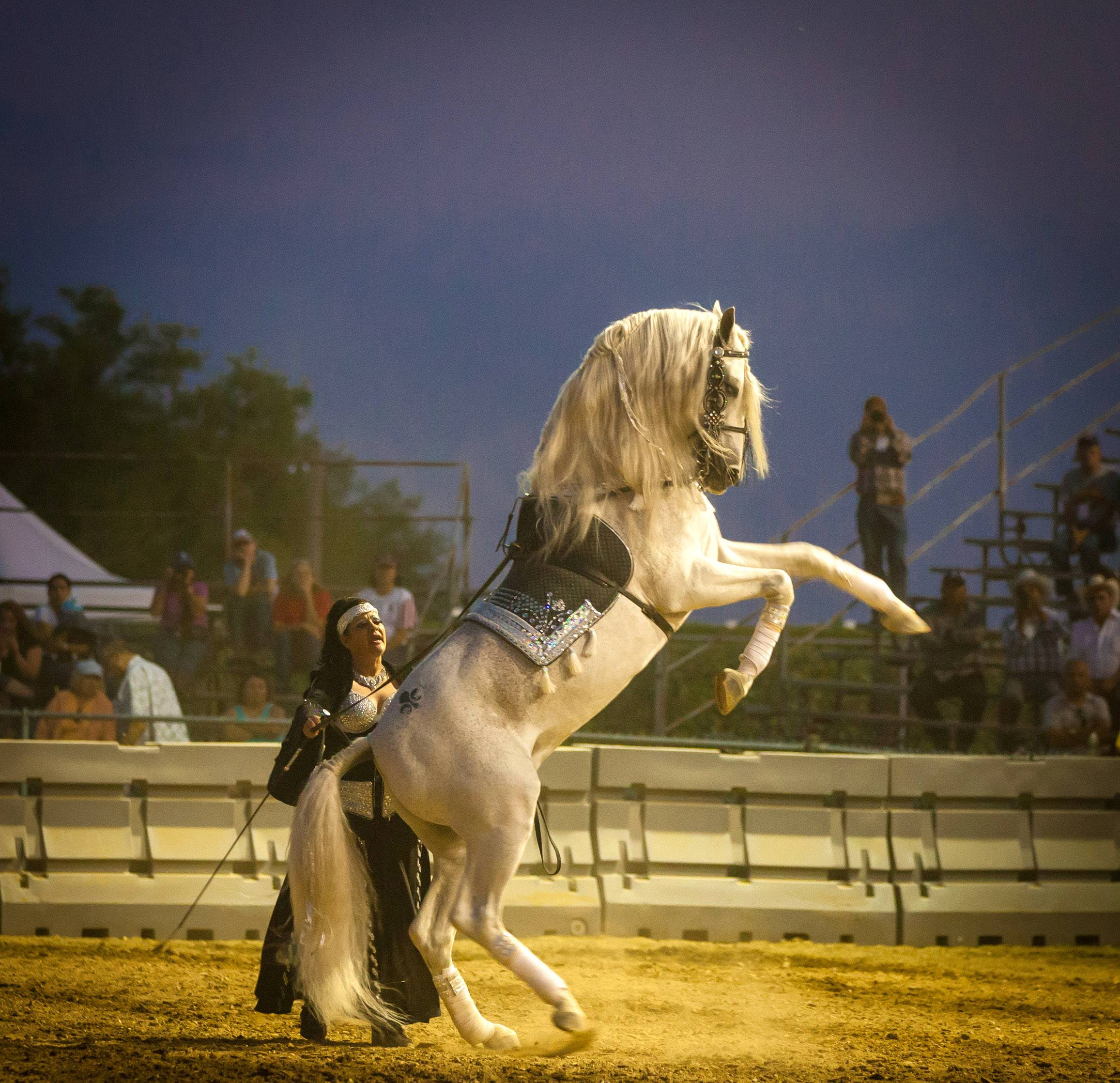 Desiree Herrmann, a trainer at the Monte Cristo Equestrian Center in Maple Park, performs with her stallion, Guapo, last year at the Kane County Fairgrounds.