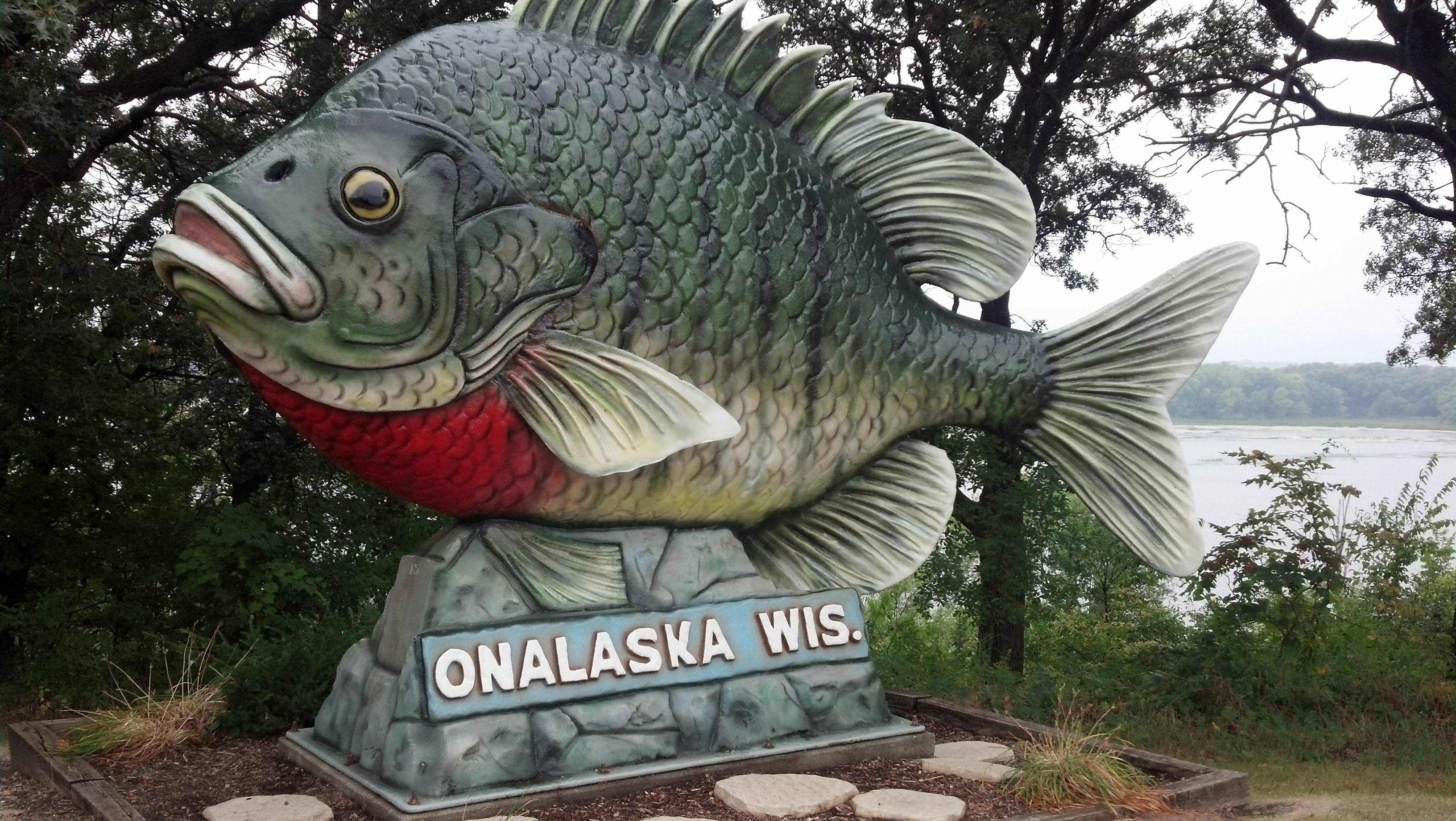 Who wouldn't want to stop to take a picture with this whopper? It's the official Sunfish ambassador of Onalaska, Wis.