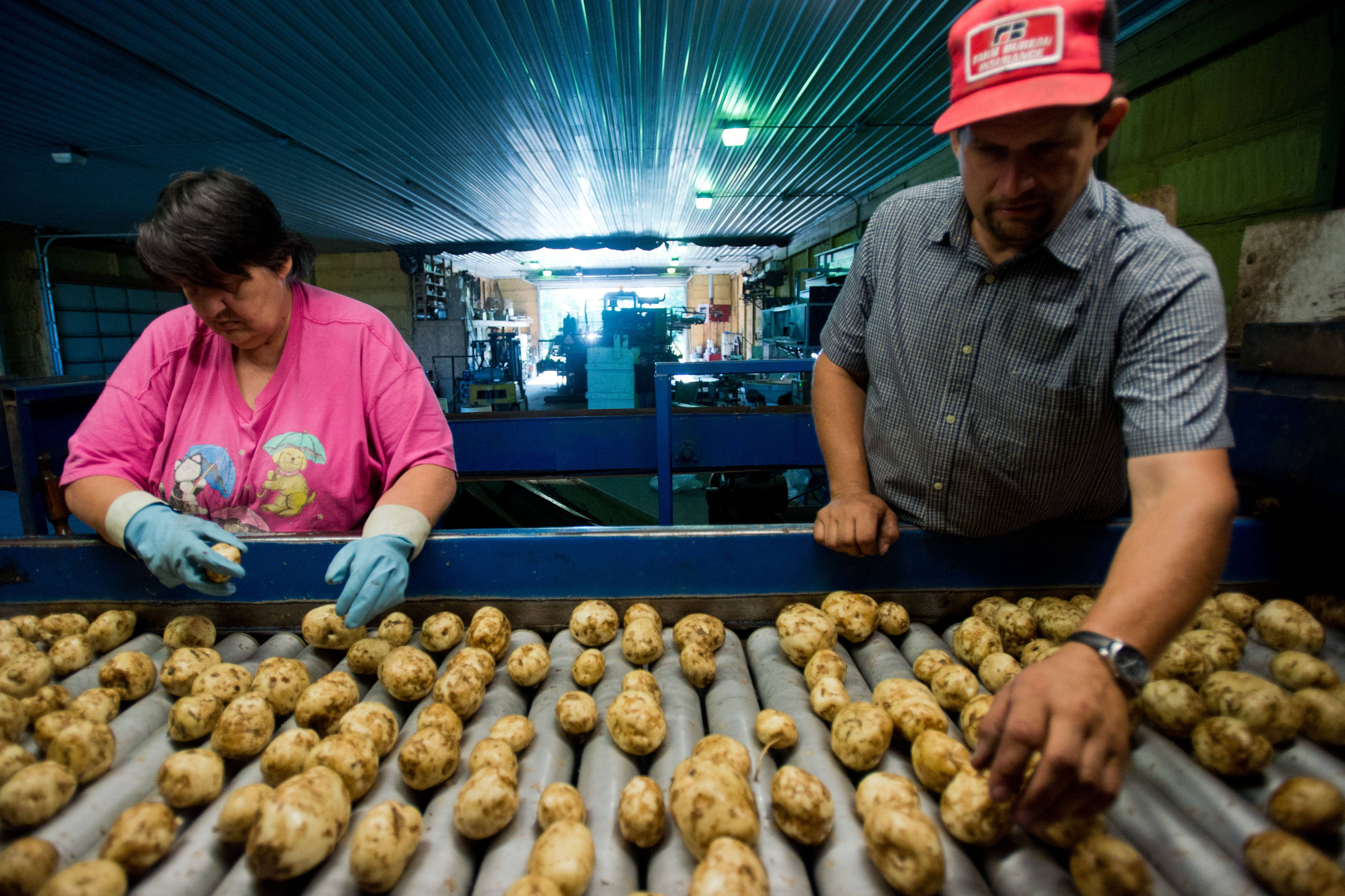 Elaine Talicska and Tom VanOchten sort potatoes as they roll down to fill 10-pound bags for small markets at the VanOchten farm, in Hampton Township, Mich. Falling gasoline costs lowered the prices that U.S. companies received for their goods and services last month, keeping overall inflation in check.