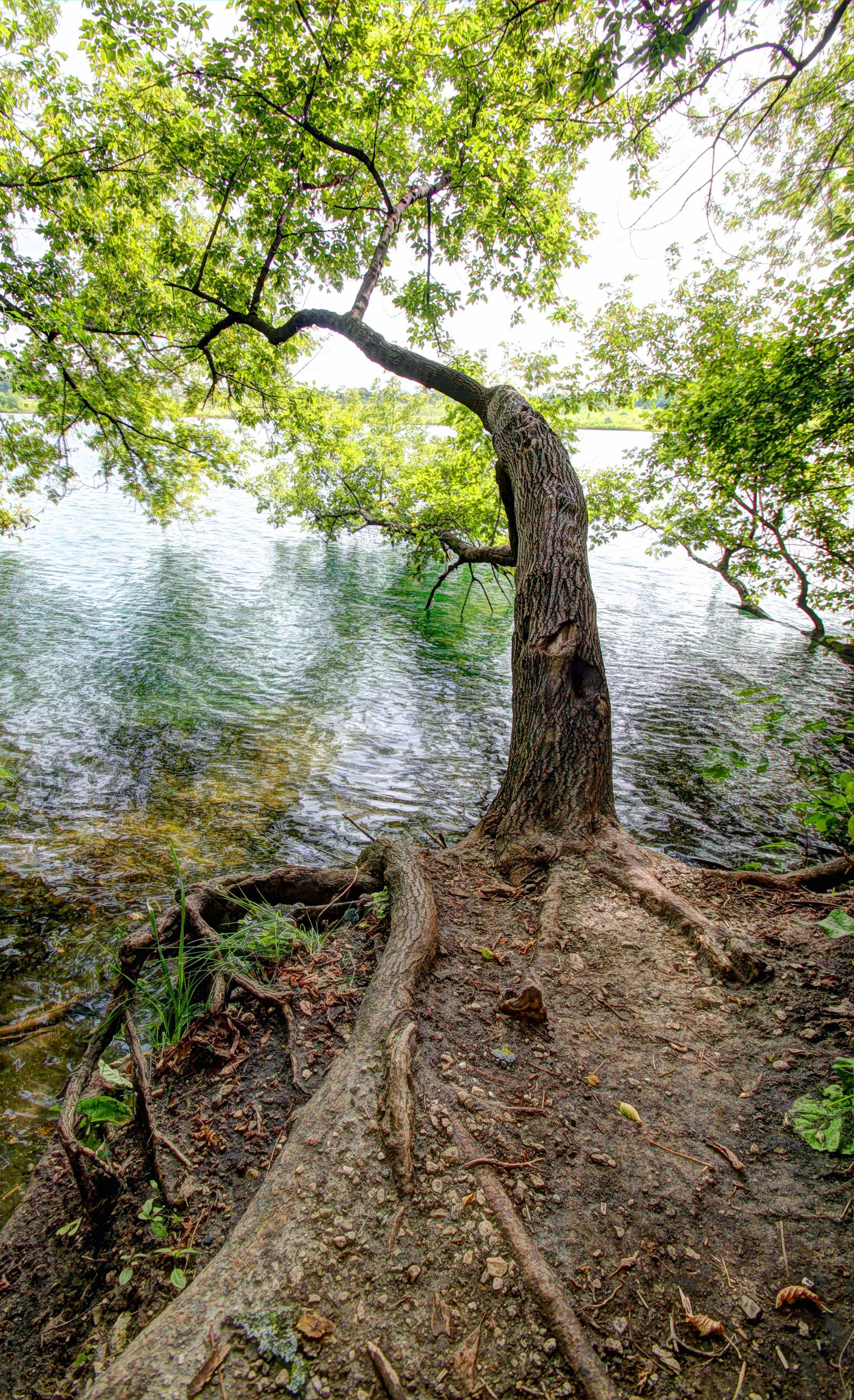 I took this photo while hiking through West Branch Forest Preserve in Carol Stream. This tree caught my eye with its tangled roots and its gravity-defying lean over Deep Quarry Lake. The choppy waters beneath it had a teal-colored hue. I took 3 handheld, vertically-oriented photos using a wide-angle lens and made an HDR composite in Photomatix.