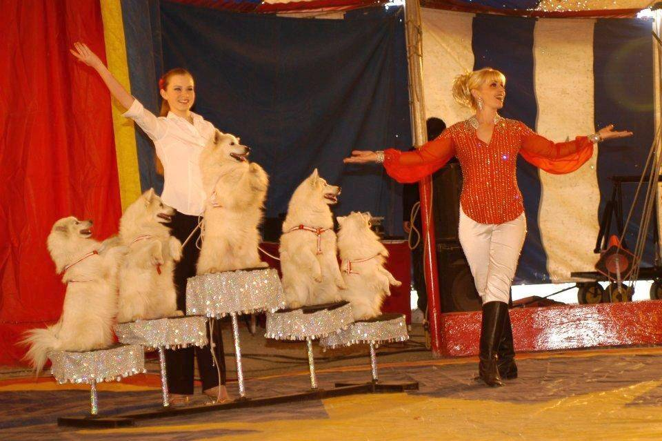 American Eskimo Escapades will perform at the Culpepper & Merriweather Circus in Hampshire.