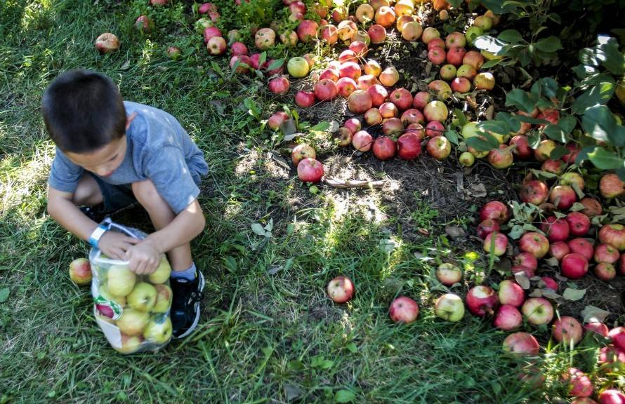 Ripe berries and crisp apples await you in eight farms clustered around Woodstock in McHenry County.