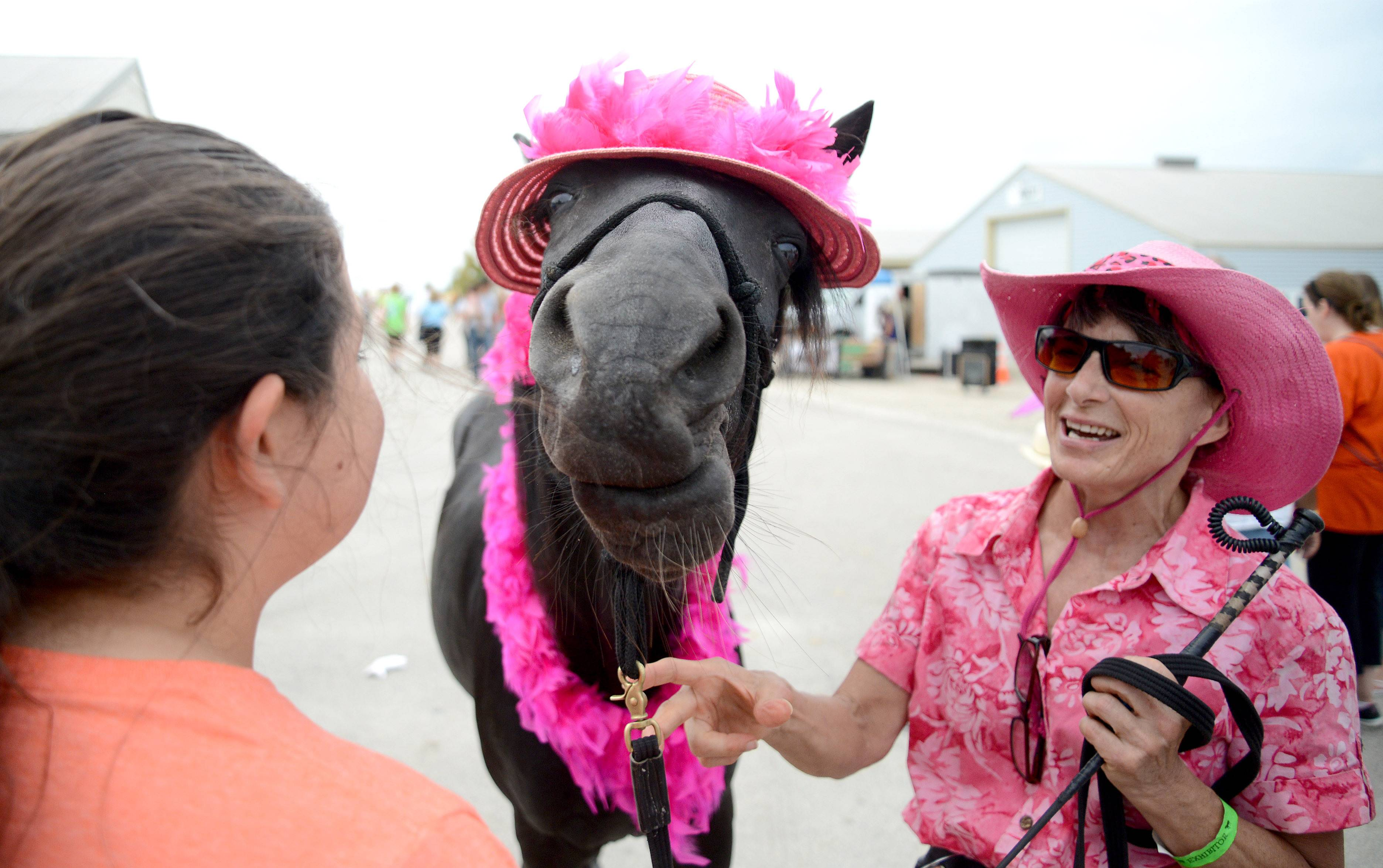 Magic the horse puckers up to plant a kiss on the cheek of Lily Ocampo, 11, of Wheeling at the Festival of the Horse and Drum at the Kane County Fairgrounds in St. Charles Saturday. Magic and her owner, Peggy Gower of Wayne, were walking around the grounds showing off tricks.