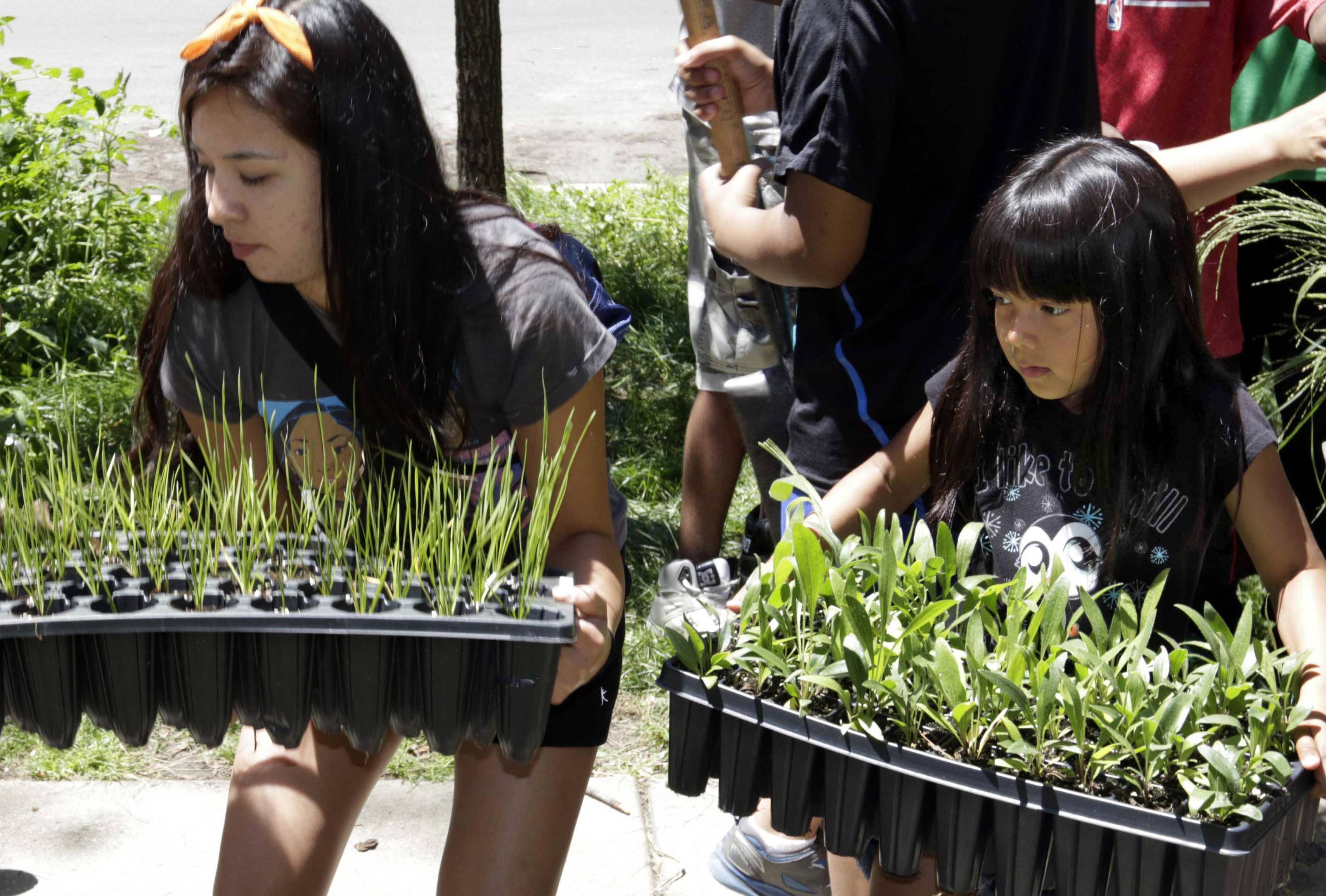 In this July 10 photo, Lilah White, left, and Natalie Cree Arguijo carry plants during a gardening exercise with the American Indian Center in Chicago. The center is using gardens to teach urban Native American youth about the importance of their connection to the land.