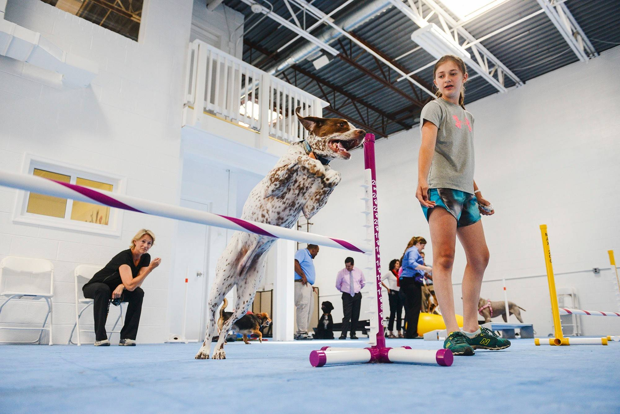 Leah Nickelsburg, 12, works with her dog Luna, a 4-year-old Bourbonnais pointer, on the agility course at the Frolick Dogs gym in Alexandria, Va. The 6,000-square-foot, air-conditioned facility has two treadmills, balance balls, cross-training space and an agility course of hurdles, tunnels and balance beams.