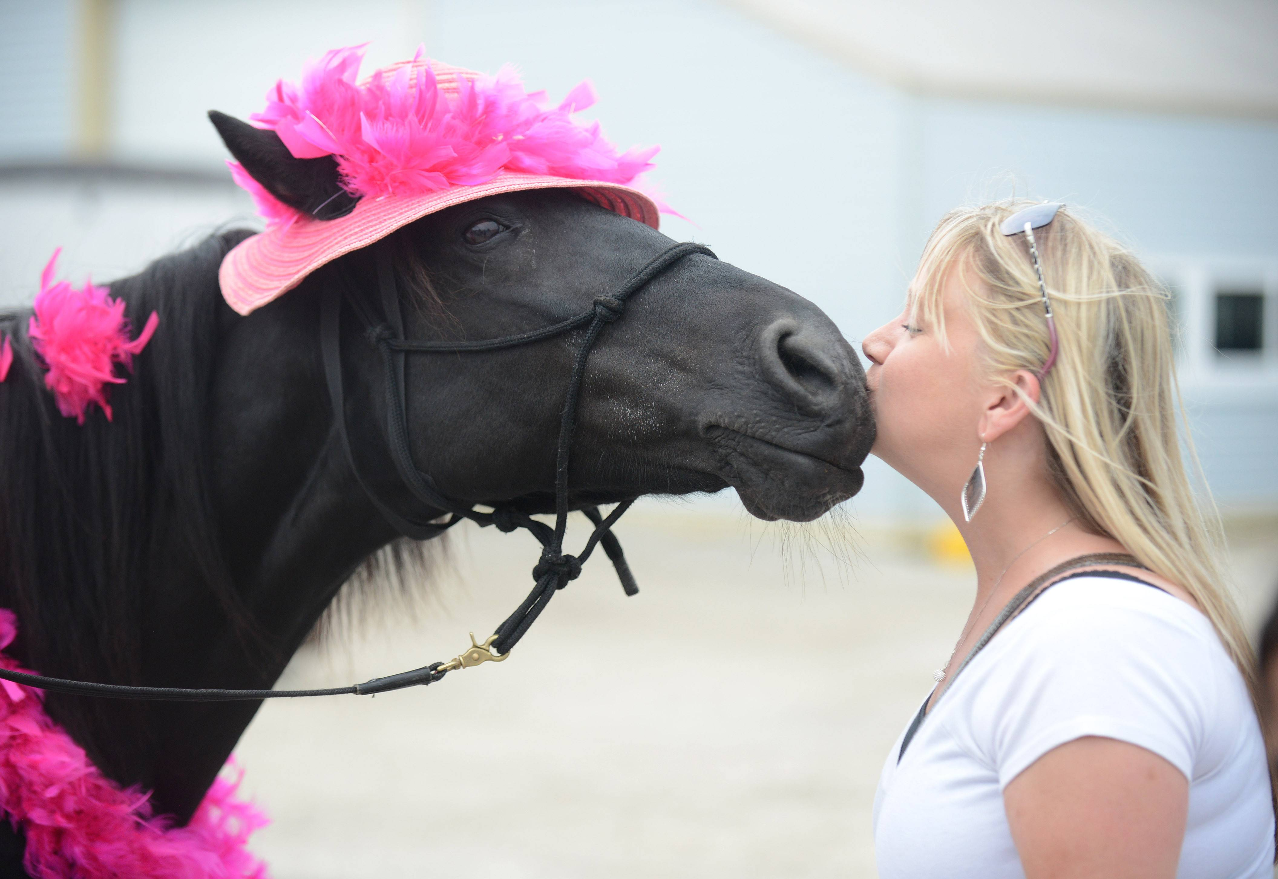 Magic the horse puckers up to plant a kiss on Michelle Tuozzo, of Huntley, at the Festival of the Horse & Drum at the Kane County Fairgrounds in St. Charles Saturday. Magic, 21, and her owner, Peggy Gower of Wayne, were walking around the grounds showing off the tricks Magic could perform and doled out kisses.