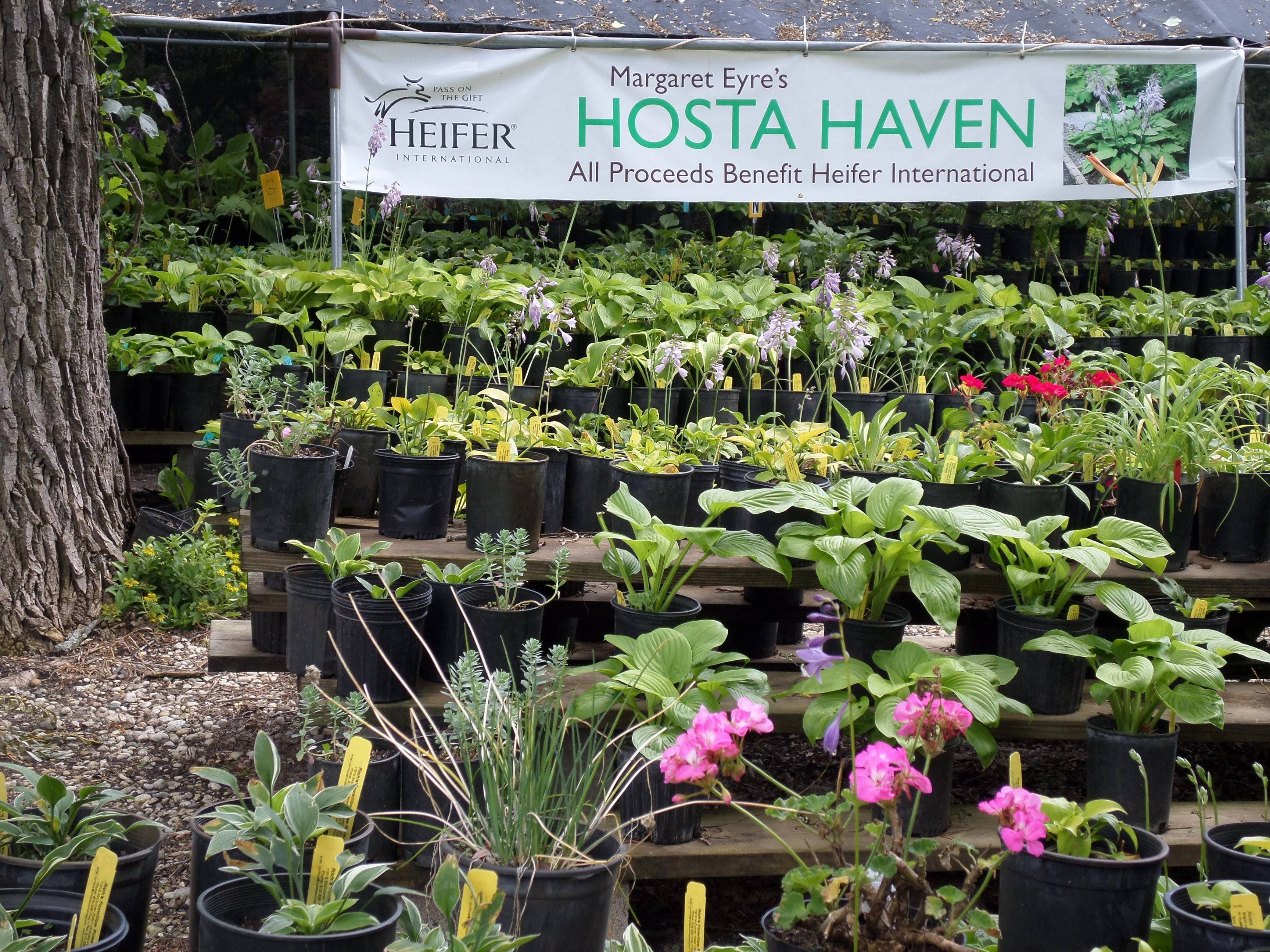 Hosta Sale and Bolivian Arts & Crafts Fundraiser will be 9 a.m. to 4 p.m. Saturday, Aug. 23, at Rich's Foxwillow Pines Nursery Inc. in Woodstock