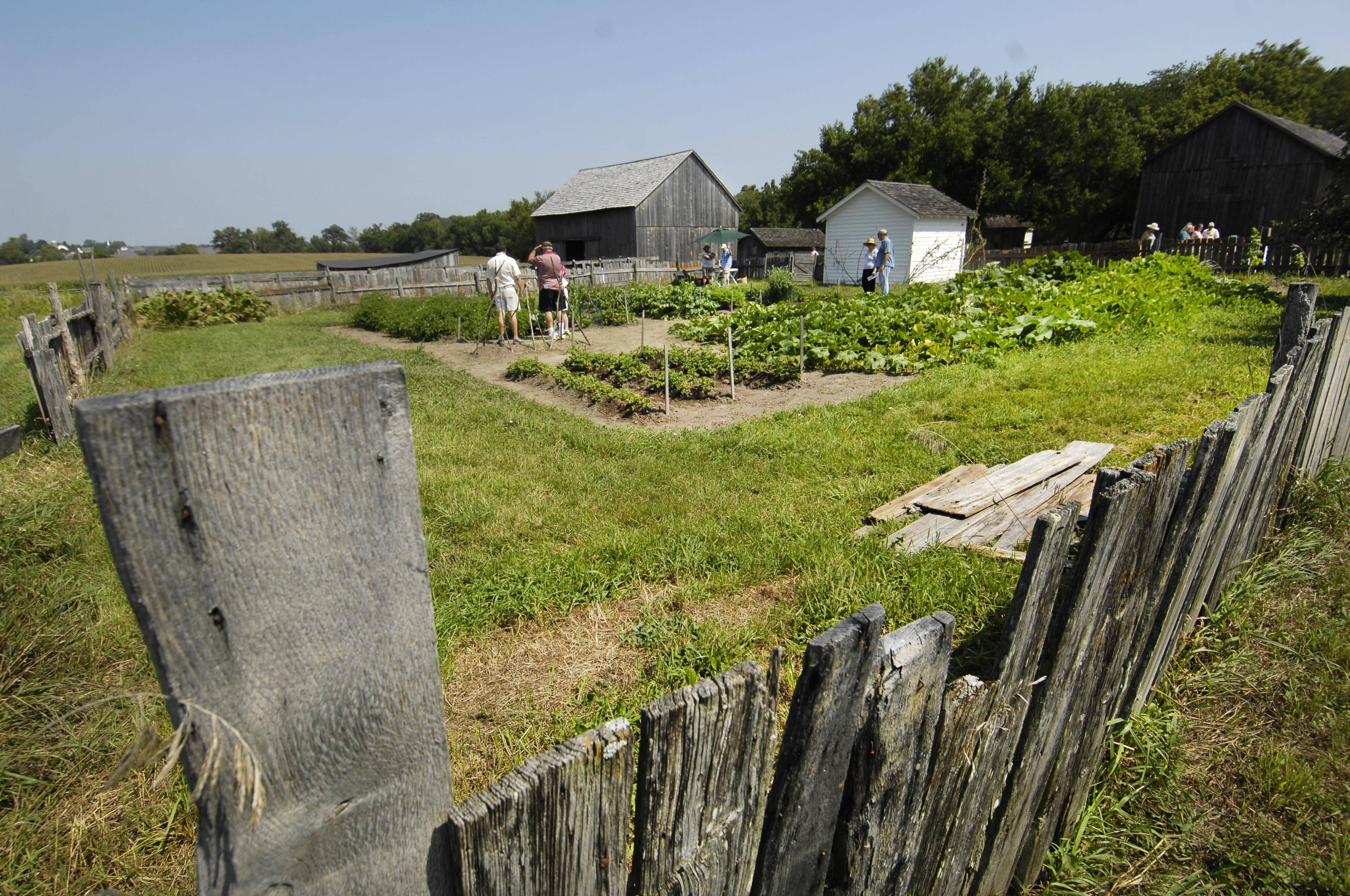 Visitors walk through a vegetable garden at the 24th annual Heirloom Garden Show at the Garfield Farm Museum in Campton Hills. The farm has the same variety of crops, flowers, vegetables and animals that were there in the 1840s.