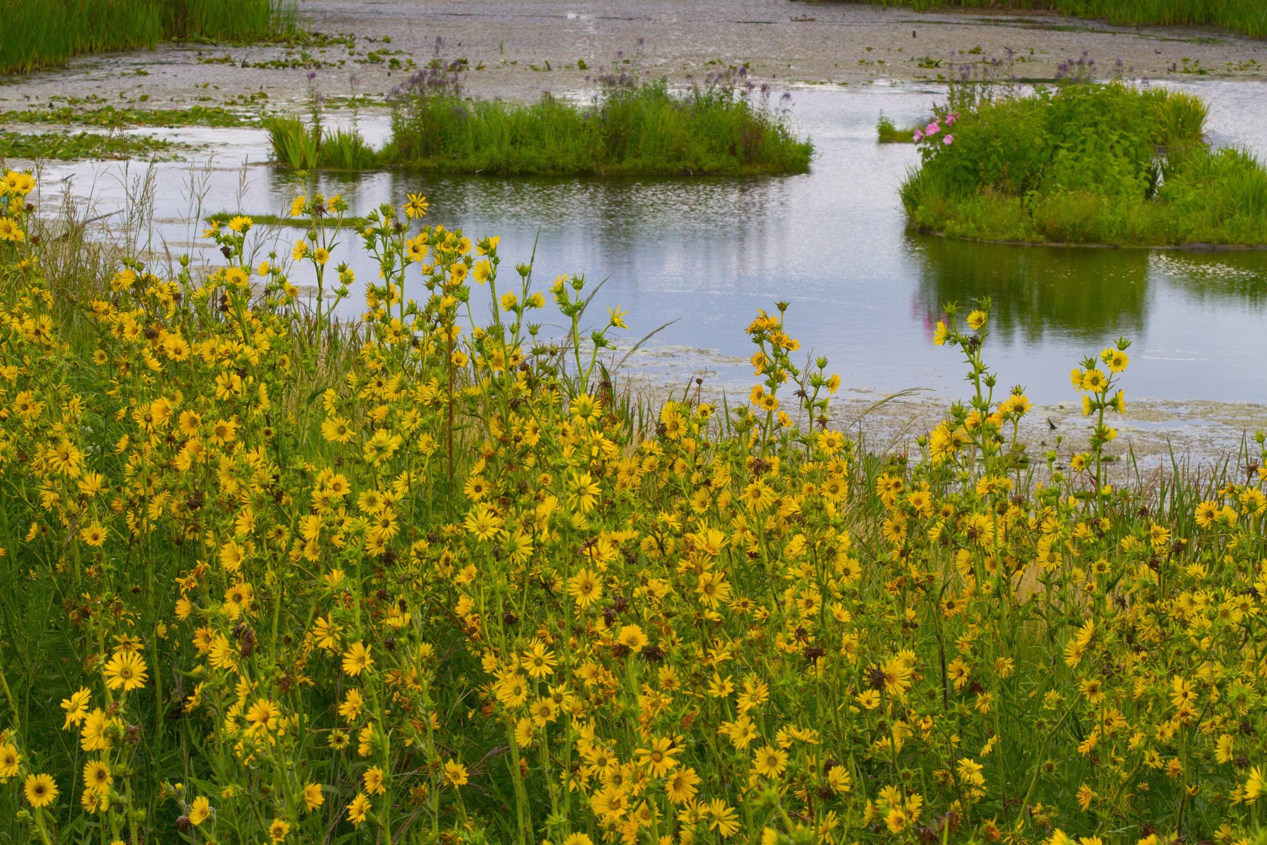 September is a beautiful time to visit Flint Creek Savanna with cooler temperatures and prairie plants in bloom.